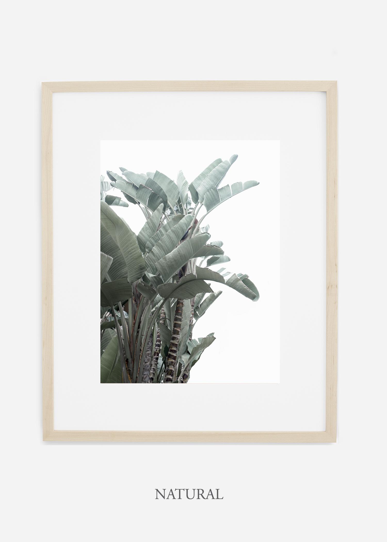 wildercalifornia_naturalframe_WinterWhite_BananaLeafNo.1_Tropical_LosAngeles_Art_HomeDecor_interiordesign_design.jpg