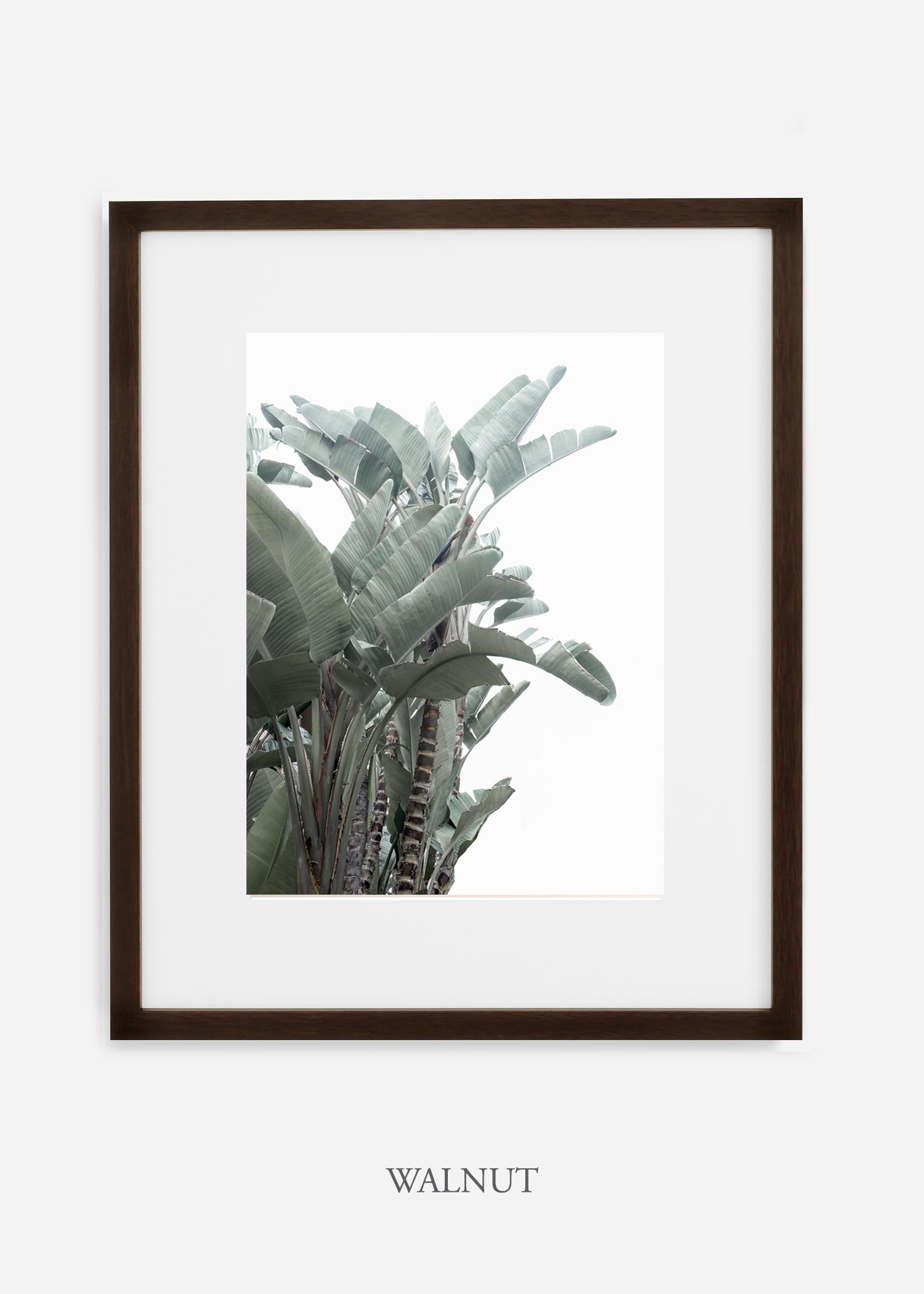 wildercalifornia_walnutframe_WinterWhite_BananaLeafNo.1_Tropical_LosAngeles_Art_HomeDecor_interiordesign_design.jpg