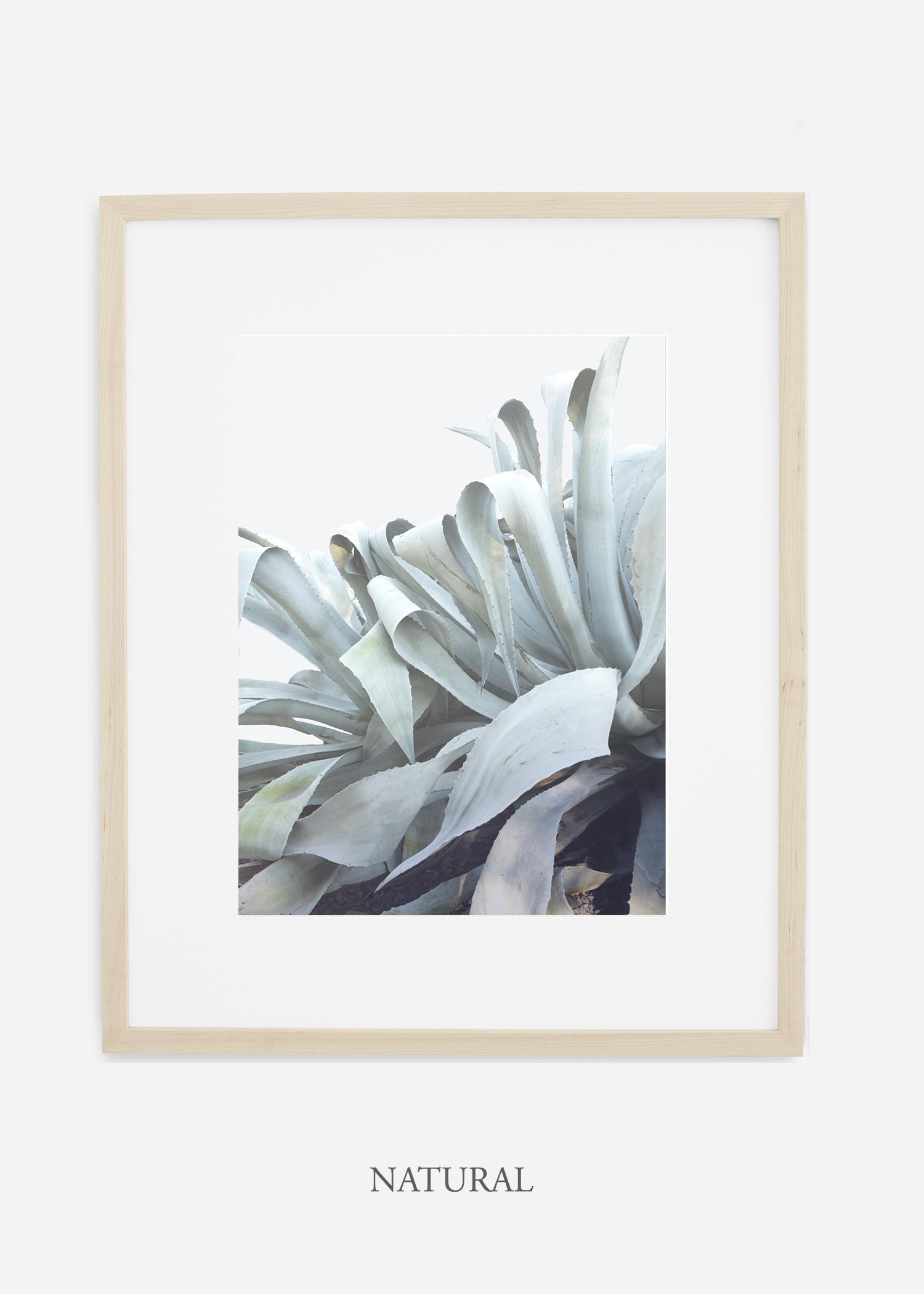wildercalifornia_naturalframe_WinterWhite_AgaveNo.2_Desert_LosAngeles_Art_HomeDecor_interiordesign_design.jpg