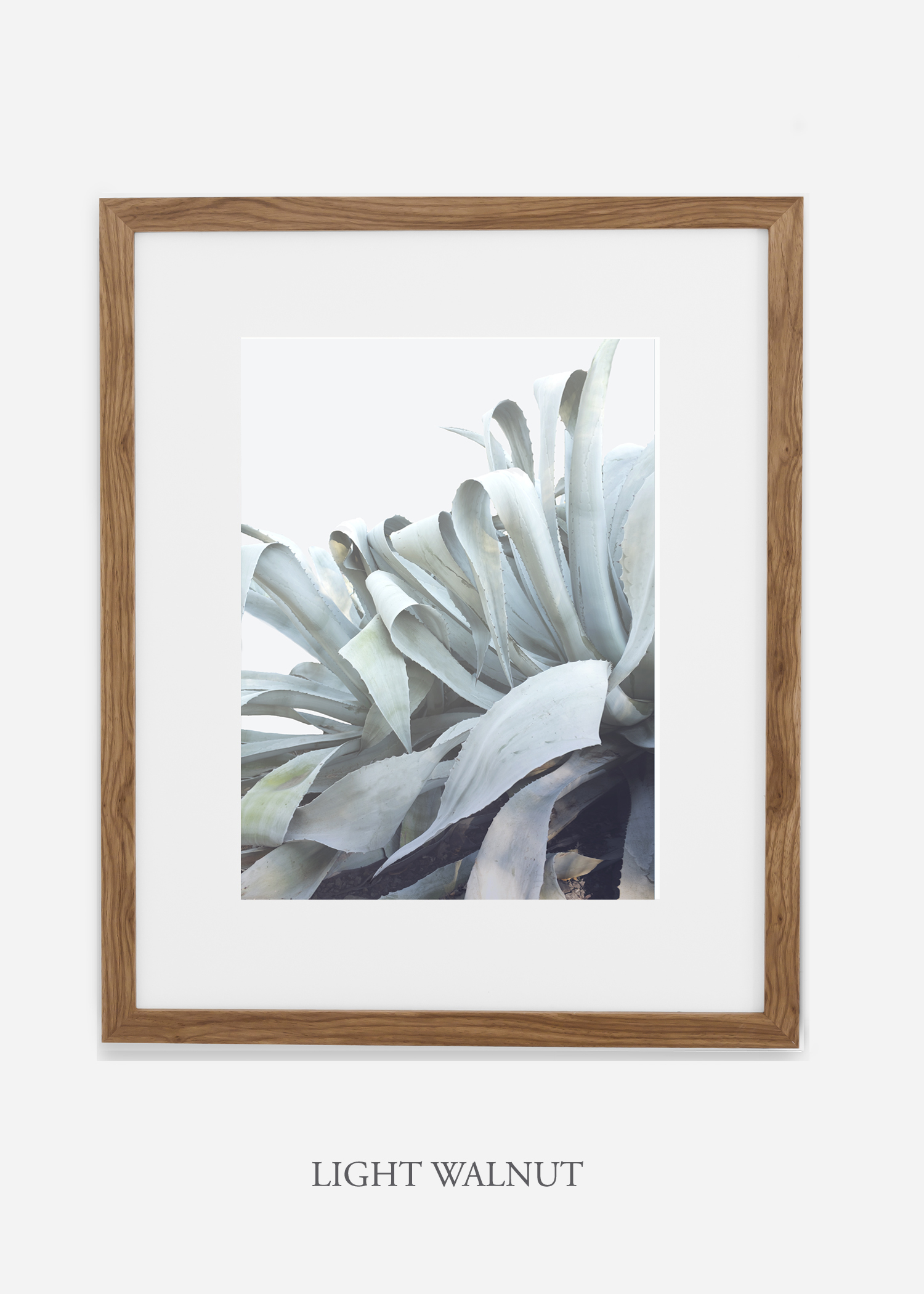 wildercalifornia_lightwalnutframe_WinterWhite_AgaveNo.2_Desert_LosAngeles_Art_HomeDecor_interiordesign_design.jpg