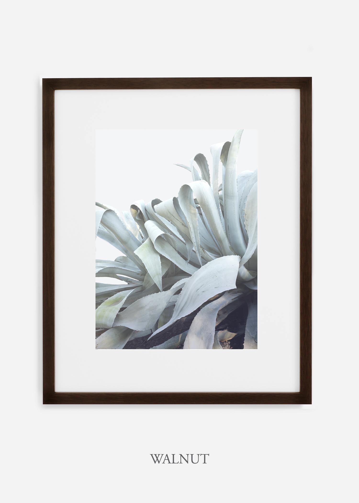 wildercalifornia_walnutframe_WinterWhite_AgaveNo.2_Desert_LosAngeles_Art_HomeDecor_interiordesign_design.jpg