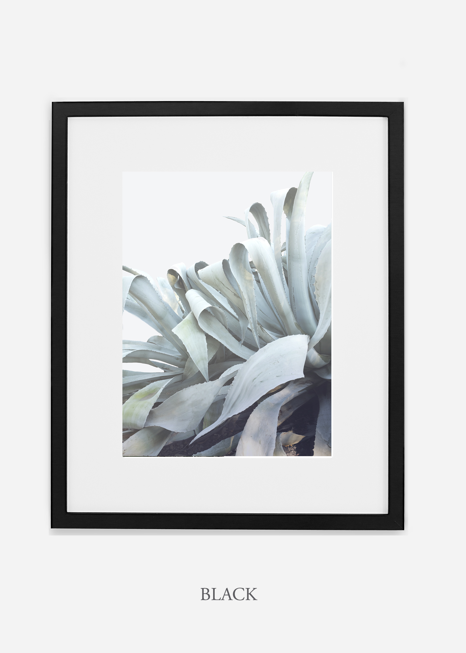 wildercalifornia_blackframe_WinterWhite_AgaveNo.2_Desert_LosAngeles_Art_HomeDecor_interiordesign_design.jpg