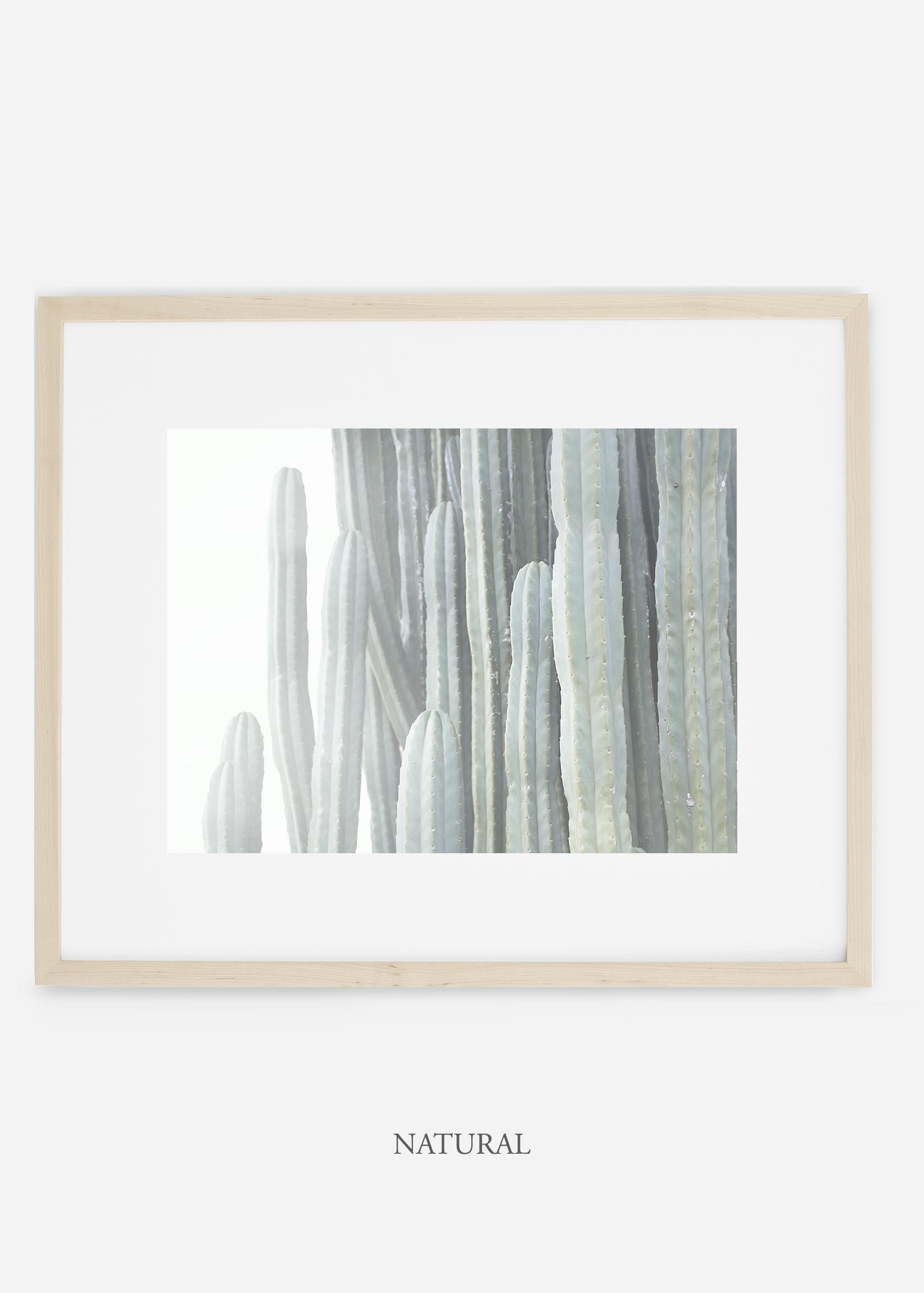 WilderCalifornia_naturalframe__Cactus_Art_Photography_interiordesign_white_bohemian_neutral_photography_photo.jpg