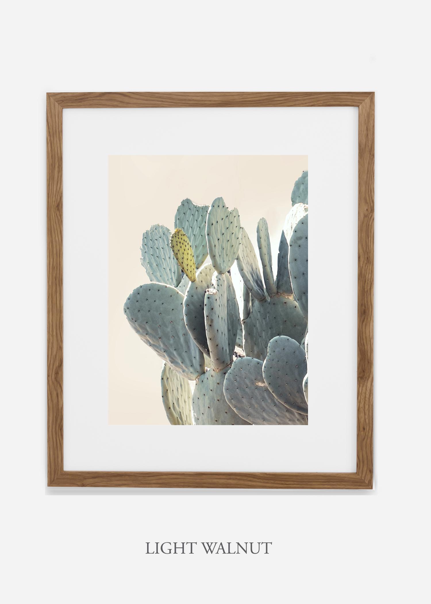 Desert_lightwalnutframe_DesertDetails_Cactus__Art_Photography_interiordesign_bohemian_cactusart.jpg