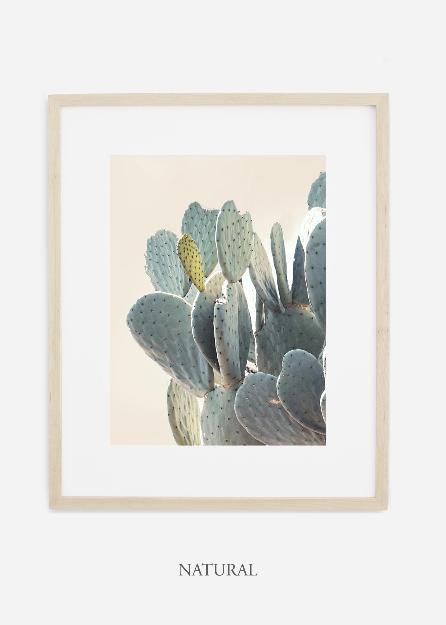 Desert_naturalframe_DesertDetails_Cactus__Art_Photography_interiordesign_bohemian_cactusart.jpg