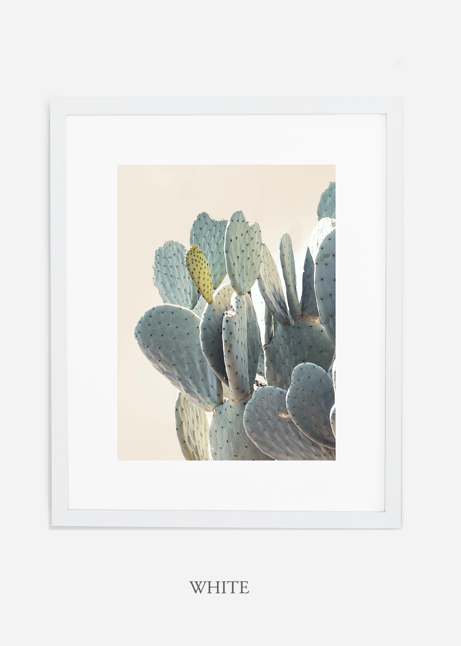 Desert_whiteframe_DesertDetails_Cactus__Art_Photography_interiordesign_bohemian_cactusart.jpg