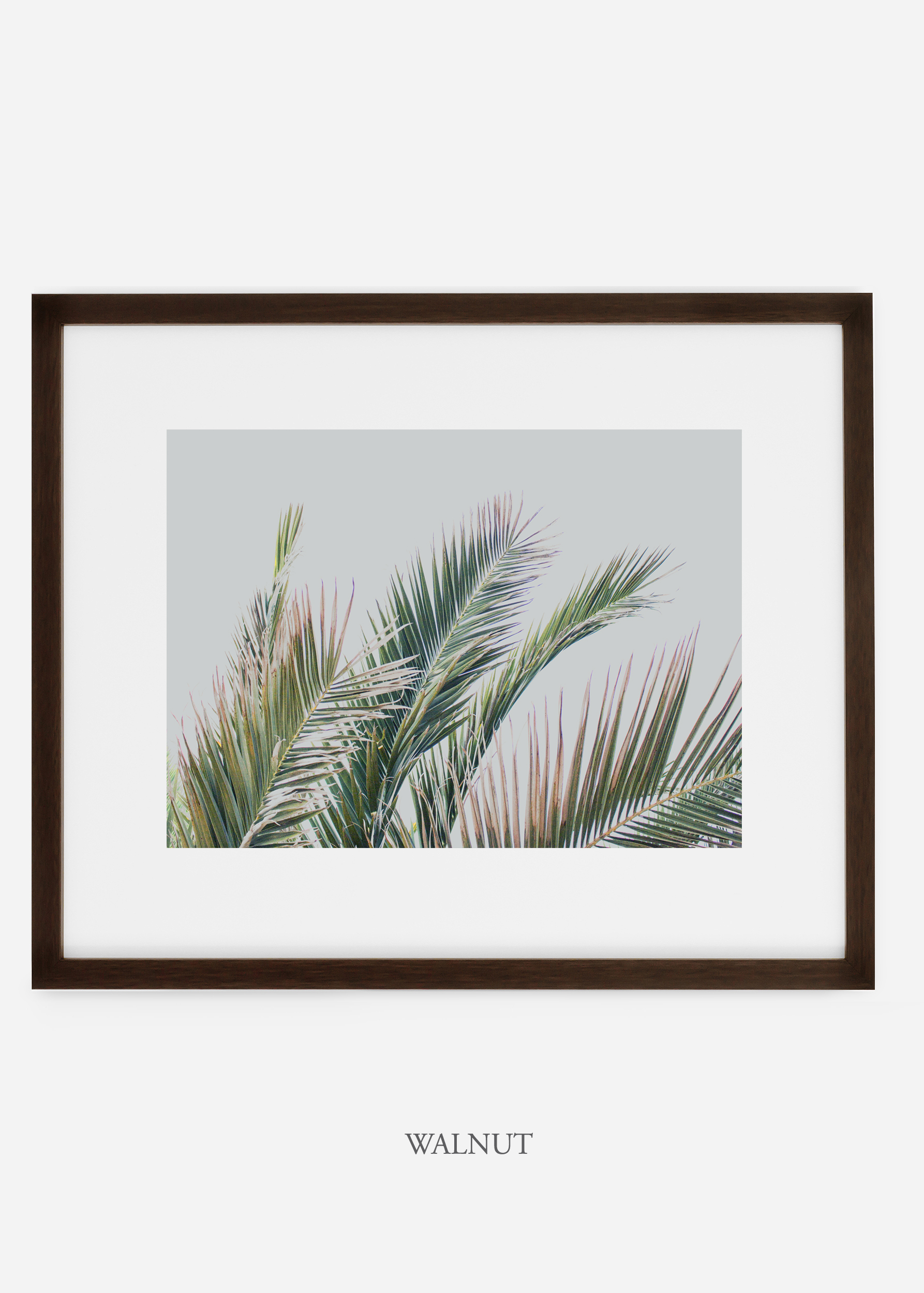 interiordesign_walnutframe_art_tropical_palmtree_StormyGrayPalm.jpg