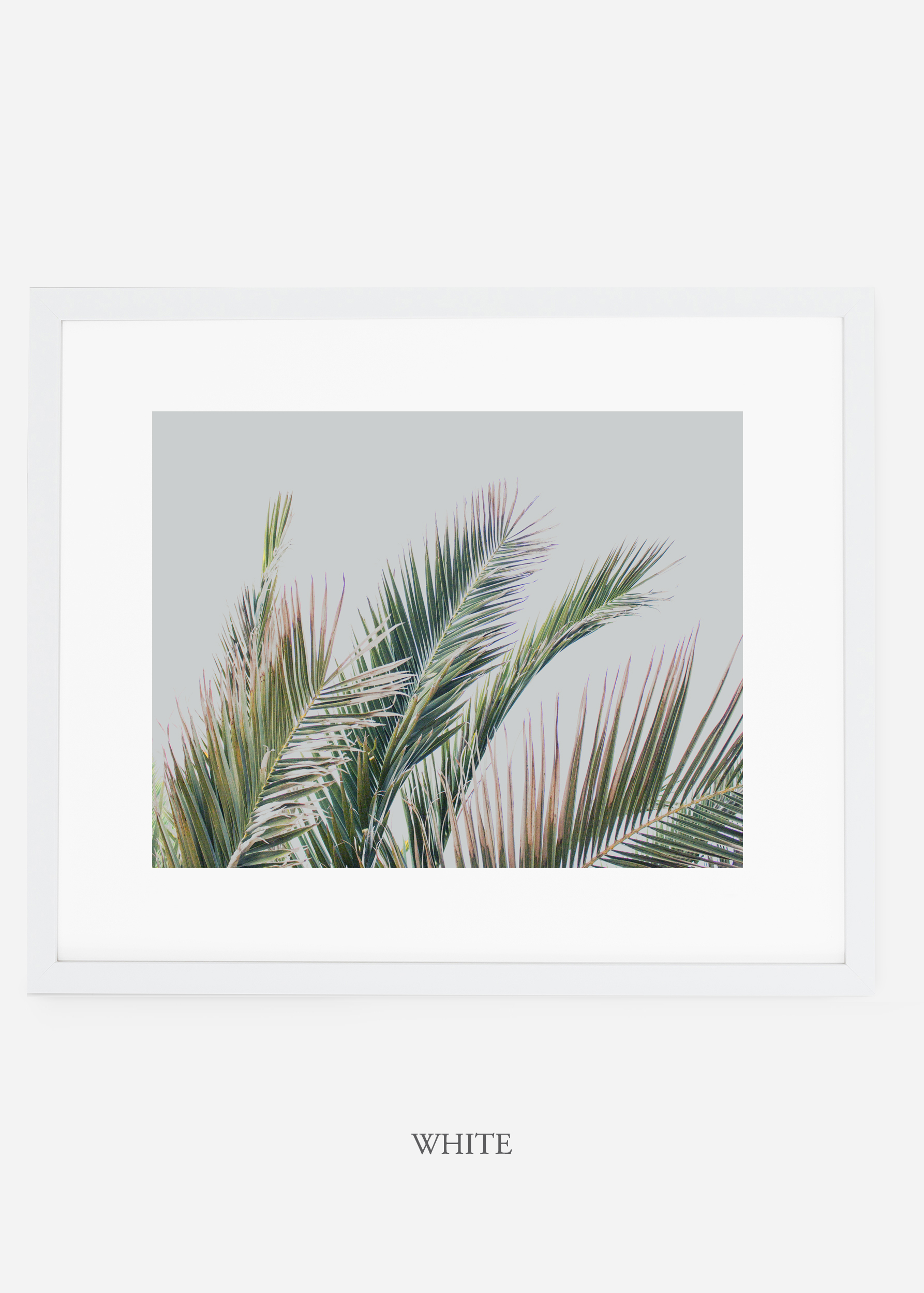 interiordesign_whiteframe_art_tropical_palmtree_StormyGrayPalm.jpg