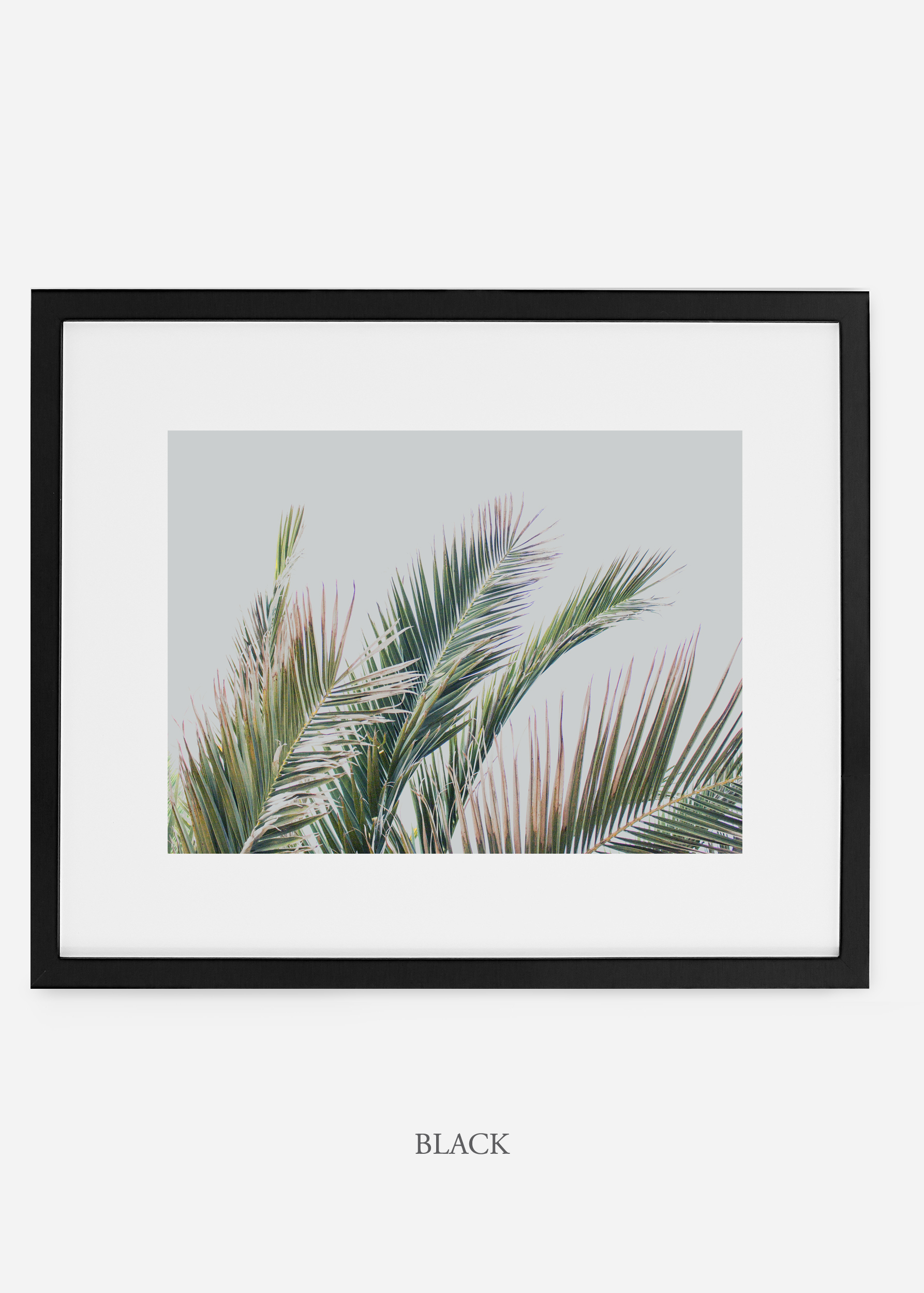 interiordesign_blackframe_art_tropical_palmtree_StormyGrayPalm.jpg