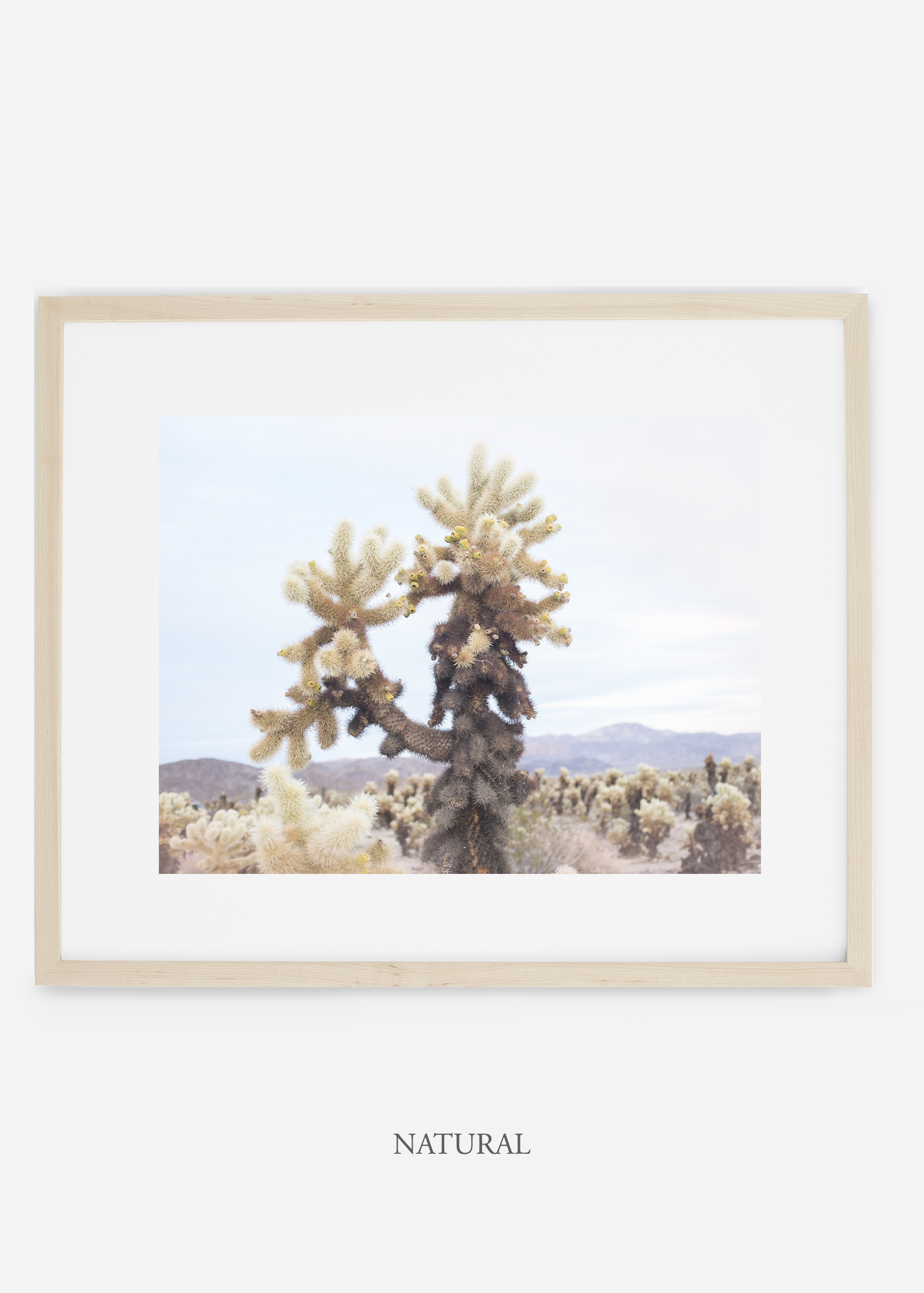 JoshuaTree_naturalframe__No.10_interiordesign_cactusprint_art.jpg