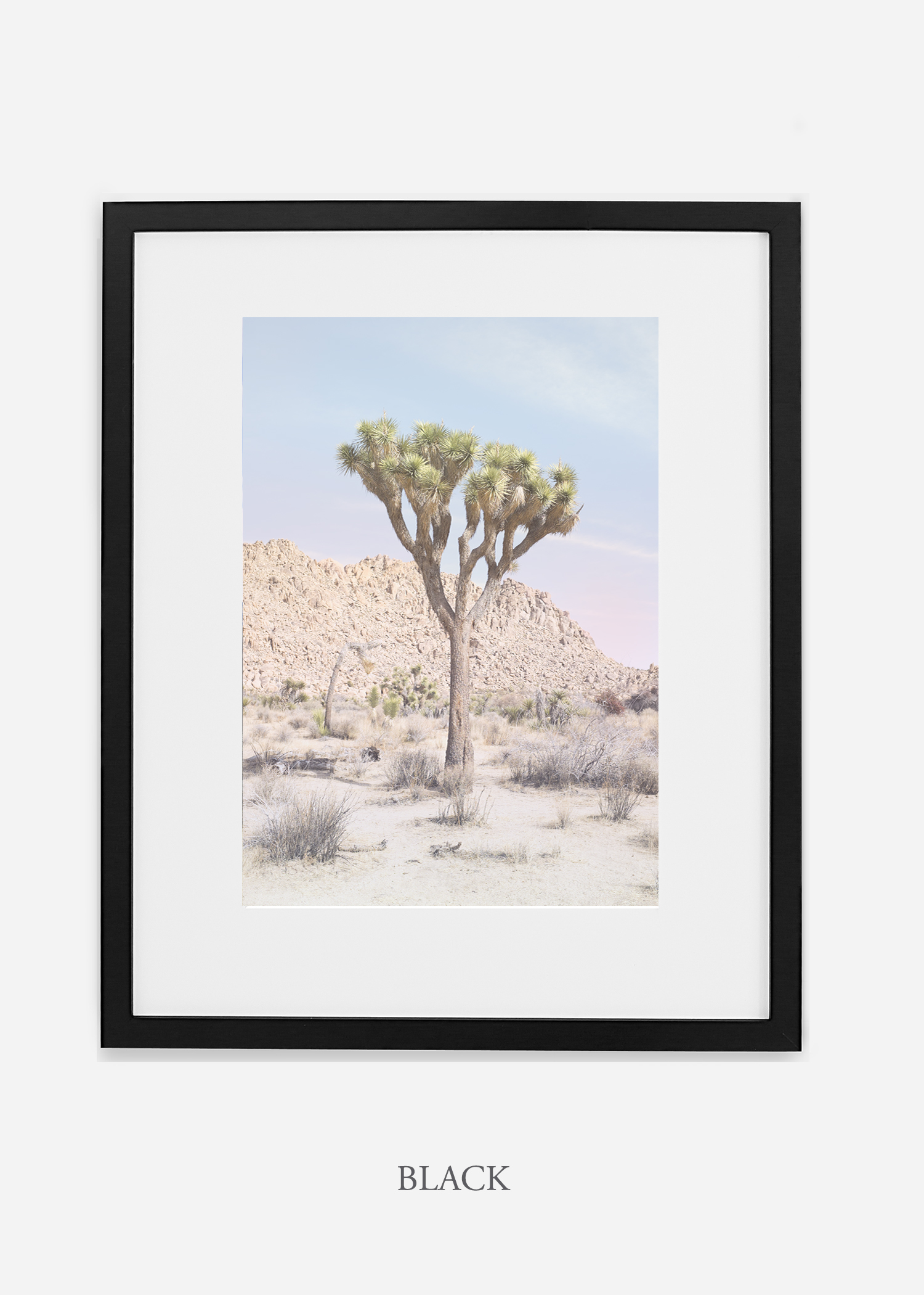 JoshuaTree_14_leaningtrees_blackframe.jpg