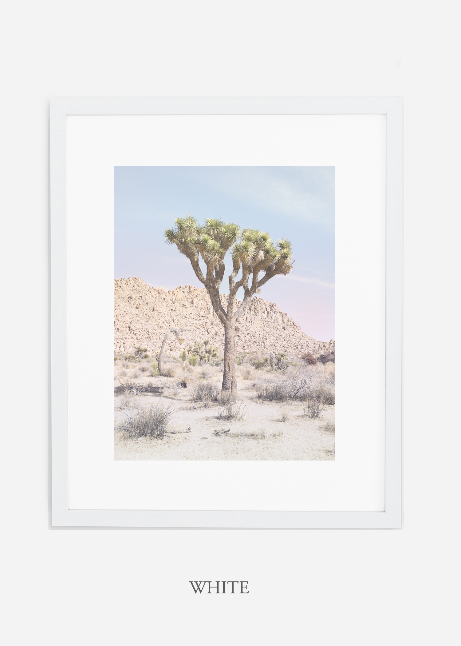 JoshuaTree_14_leaningtrees_whiteframe.jpg