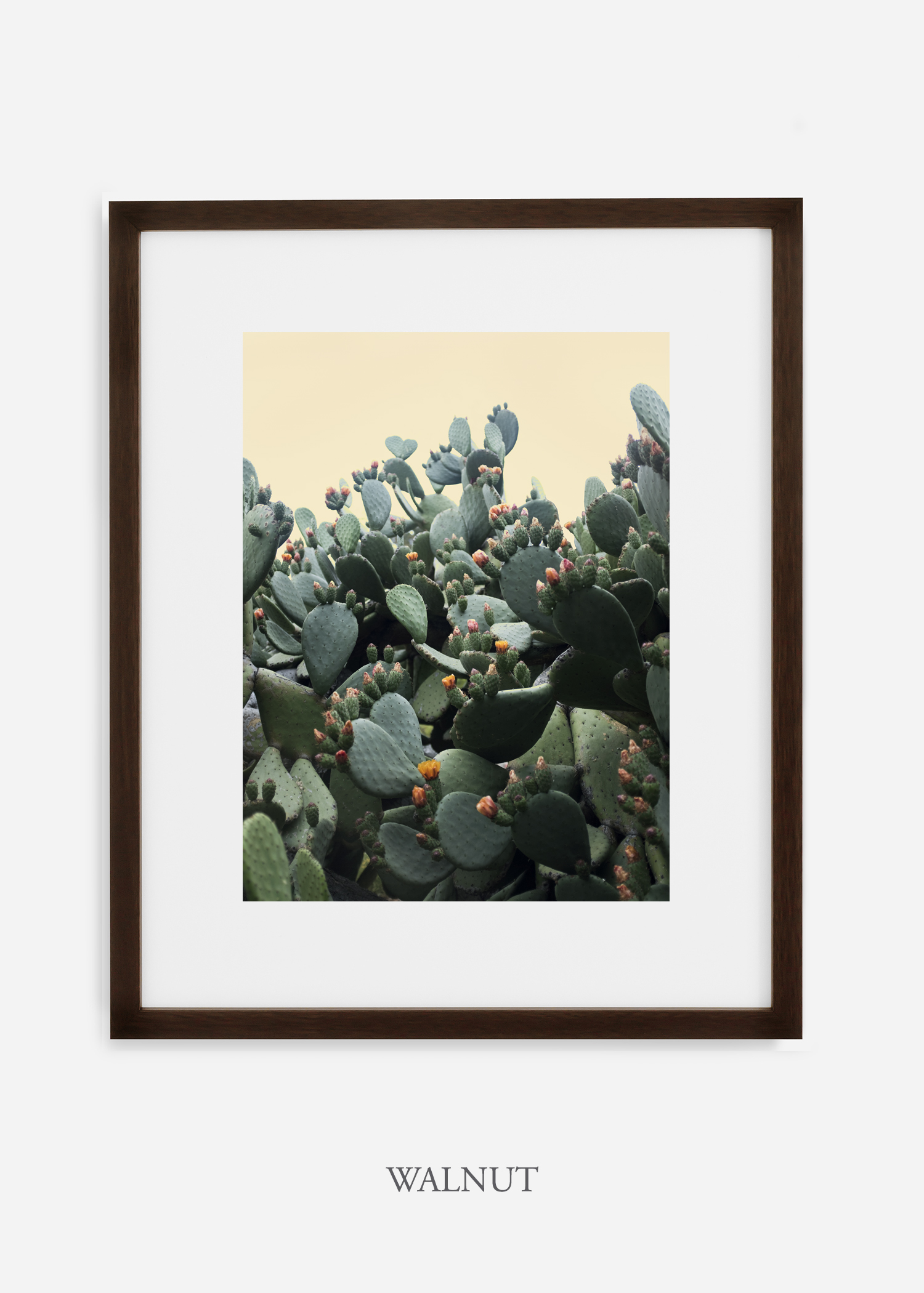 WilderCalifornia_walnutframe_CactusBloom_No1_Art_Photography_interiordesign_agave.jpg