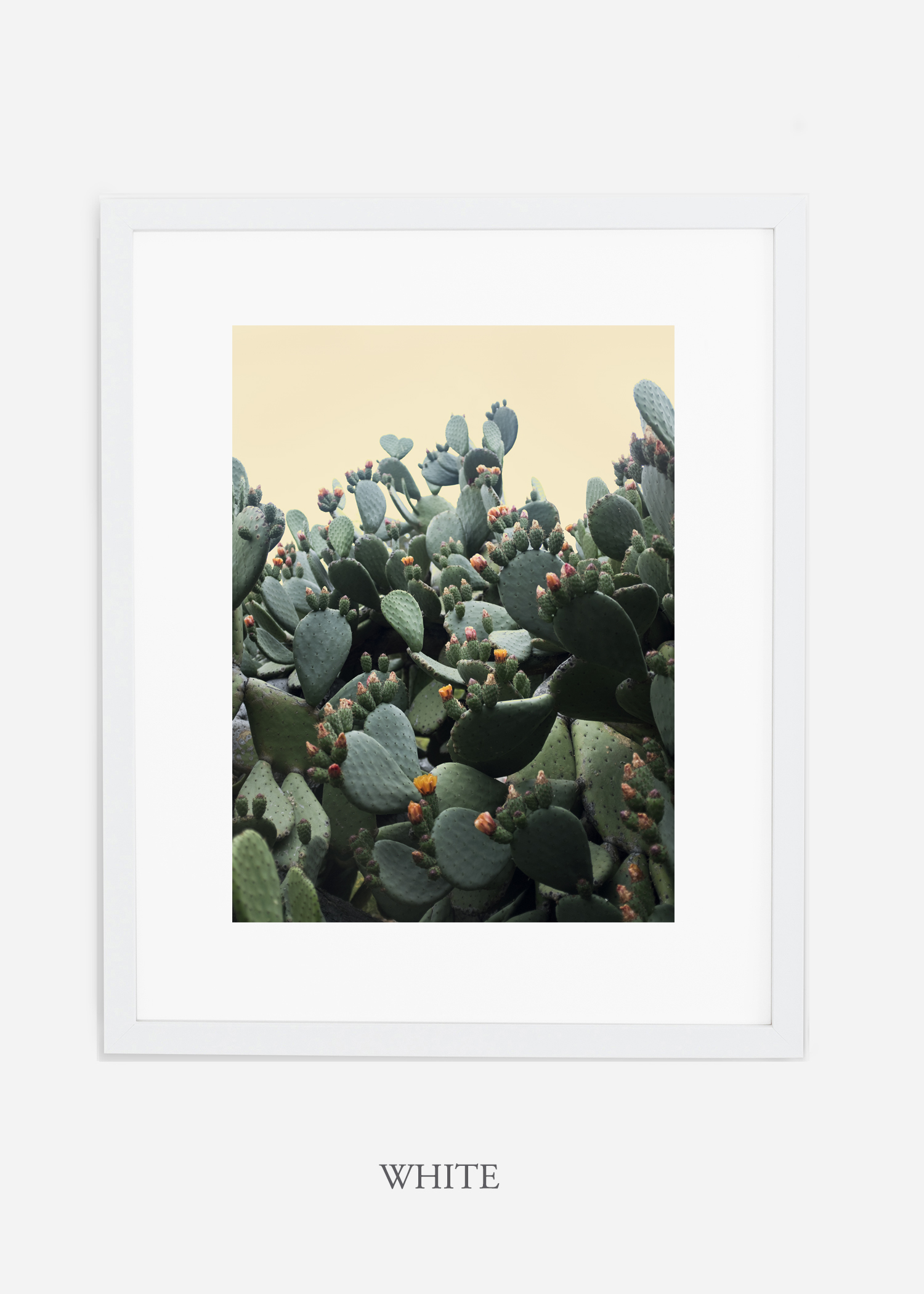 WilderCalifornia_whiteframe_CactusBloom_No1_Art_Photography_interiordesign_agave.jpg