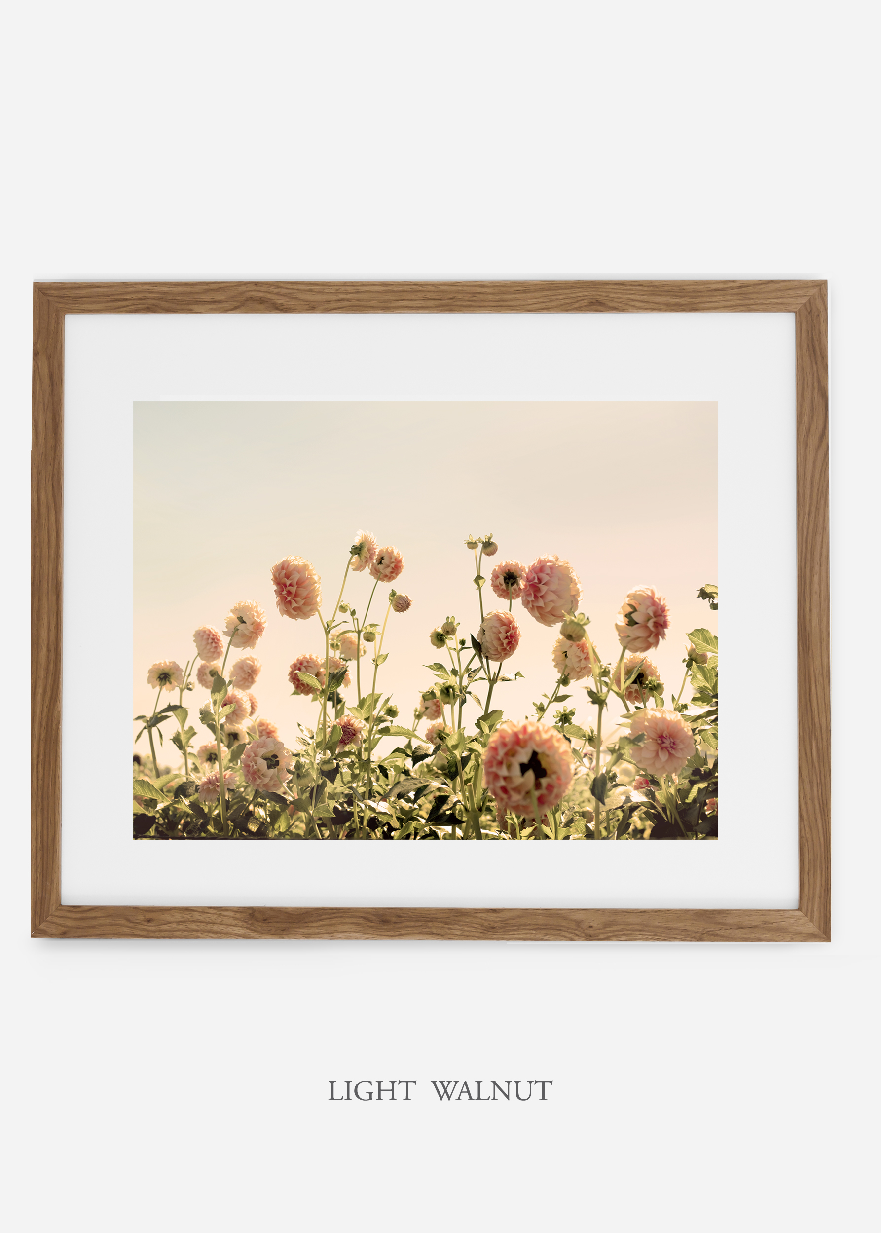 LightWalnutFrame_DahliaNo.1_WilderCalifornia_Art_Floral_Homedecor_Prints_Dahlia_Botanical_Artwork_Interiordesign.jpg