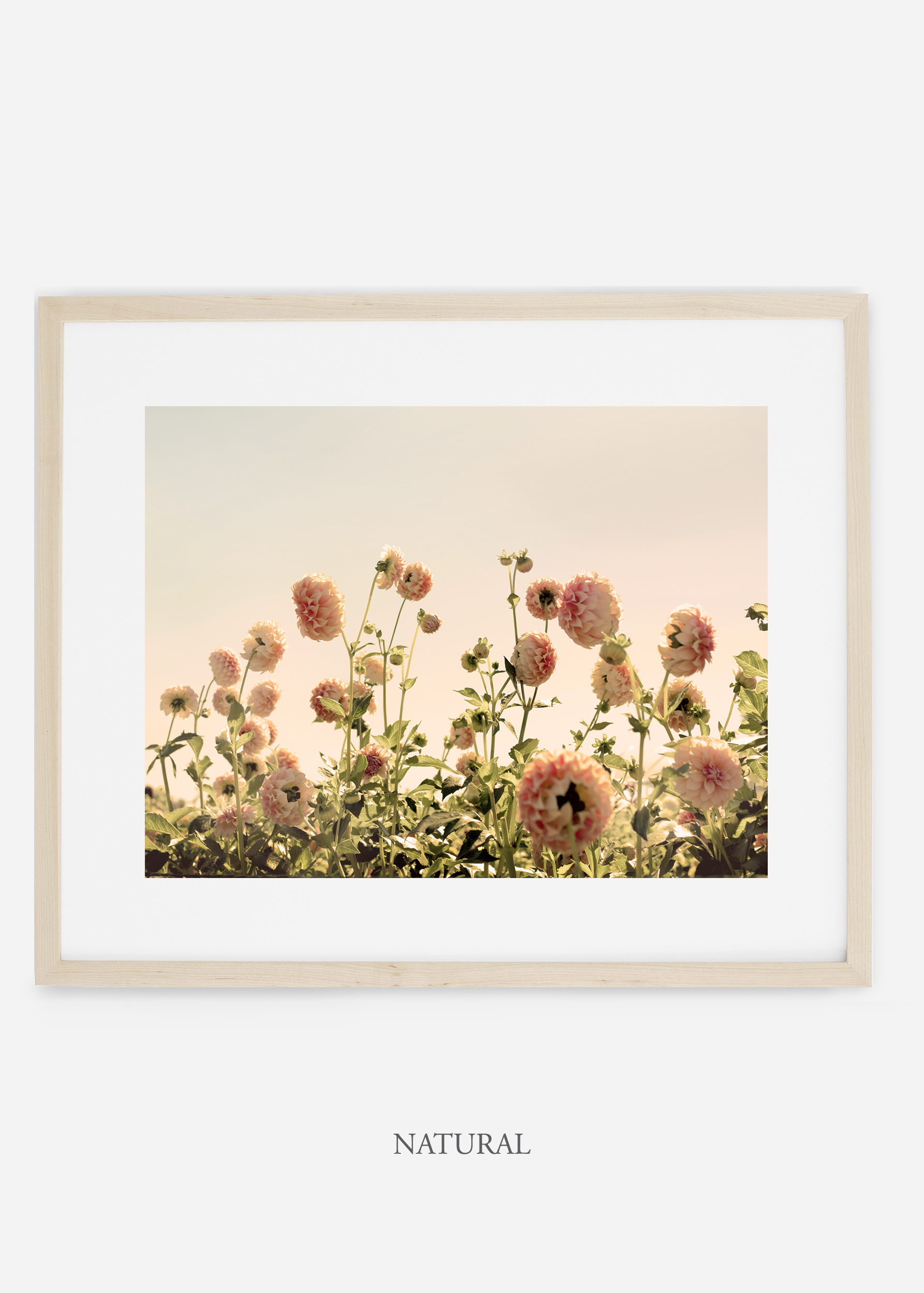 NaturalFrame_DahliaNo.1_WilderCalifornia_Art_Floral_Homedecor_Prints_Dahlia_Botanical_Artwork_Interiordesign.jpg