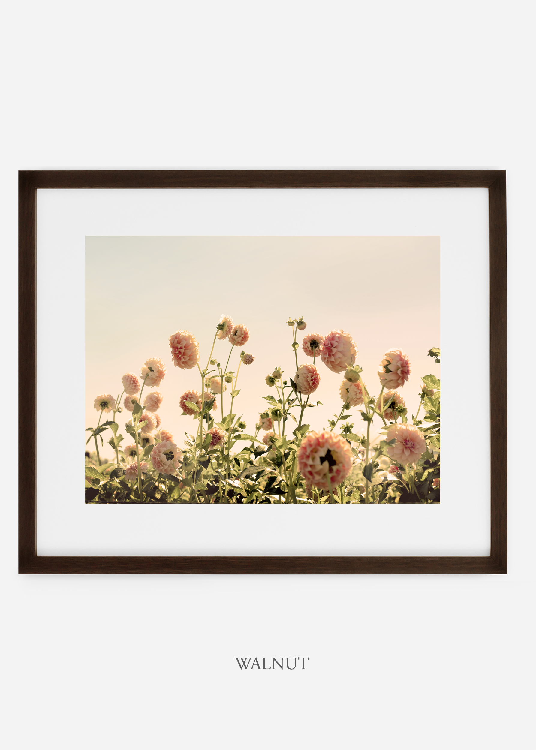 WalnutFrame_DahliaNo.1_WilderCalifornia_Art_Floral_Homedecor_Prints_Dahlia_Botanical_Artwork_Interiordesign.jpg