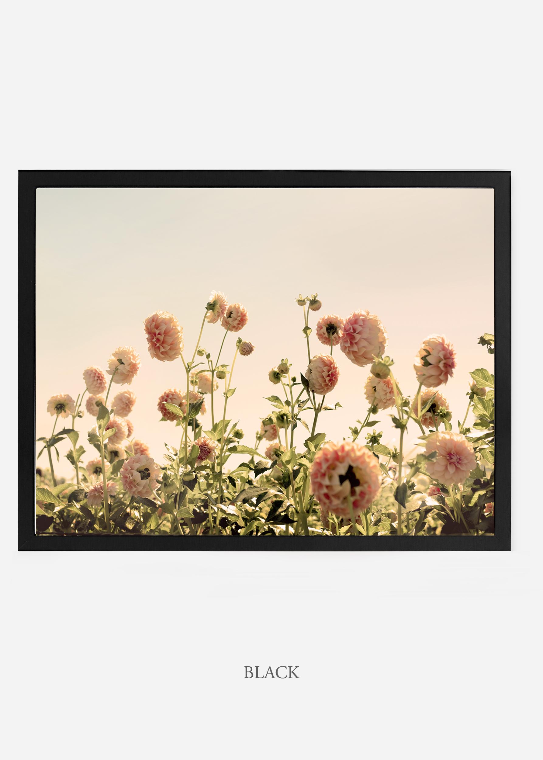 NoMat_BlackFrame_DahliaNo.1_WilderCalifornia_Art_Floral_Homedecor_Prints_Dahlia_Botanical_Artwork_Interiordesign.jpg