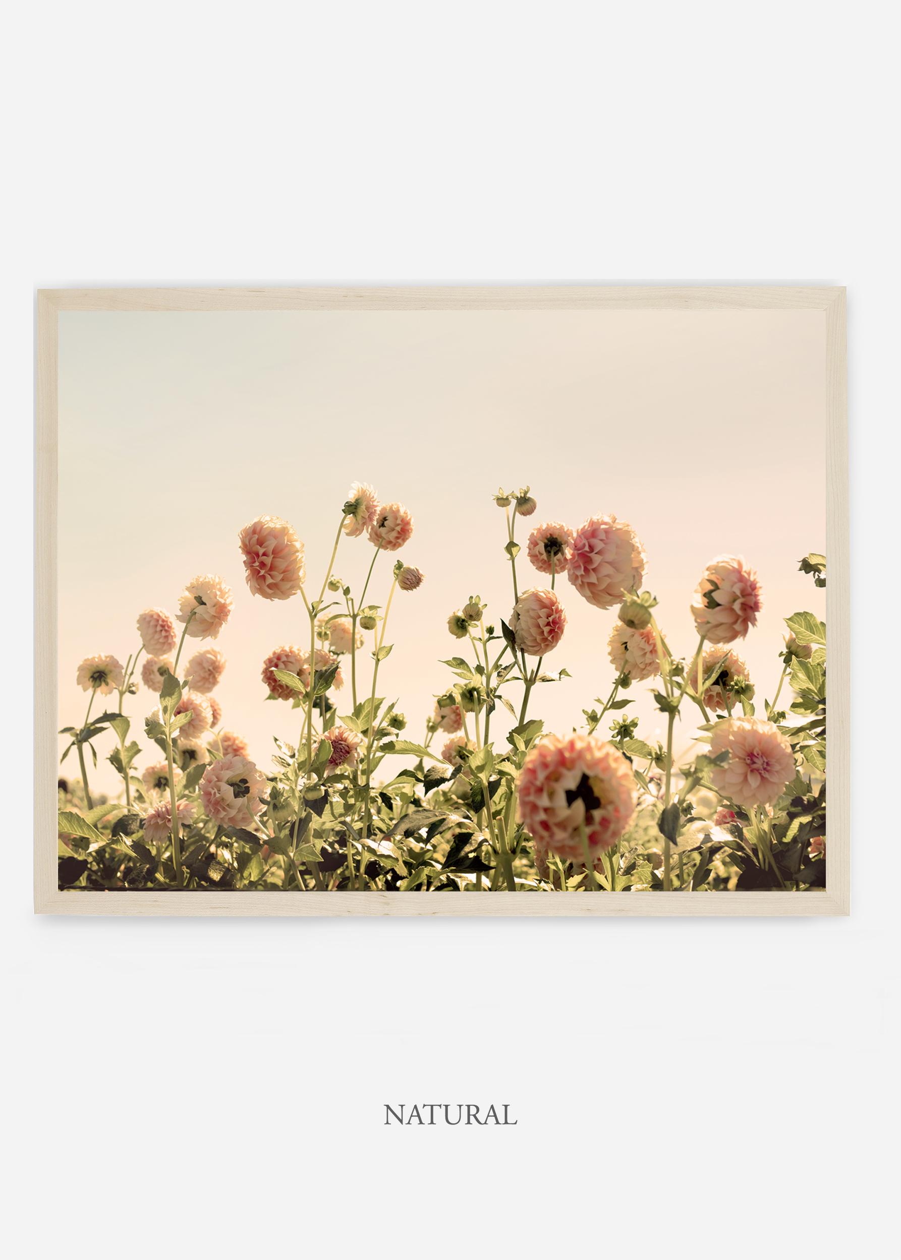 NoMat_NaturalFrame_DahliaNo.1_WilderCalifornia_Art_Floral_Homedecor_Prints_Dahlia_Botanical_Artwork_Interiordesign.jpg