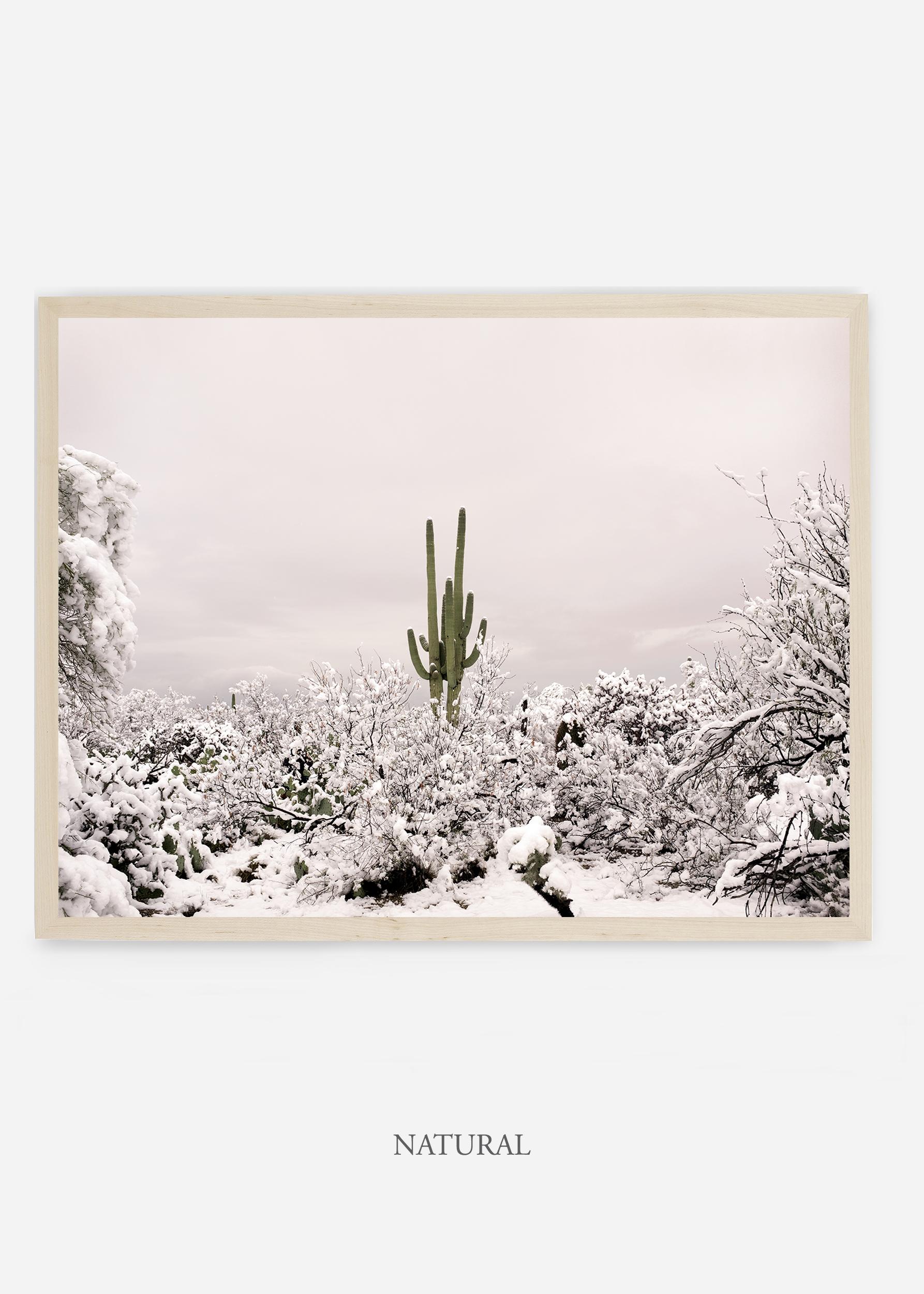 nomat_naturalframe-saguaroNo.1-wildercalifornia-art-wallart-cactusprint-homedecor-prints-arizona-botanical-artwork-interiordesign.jpg