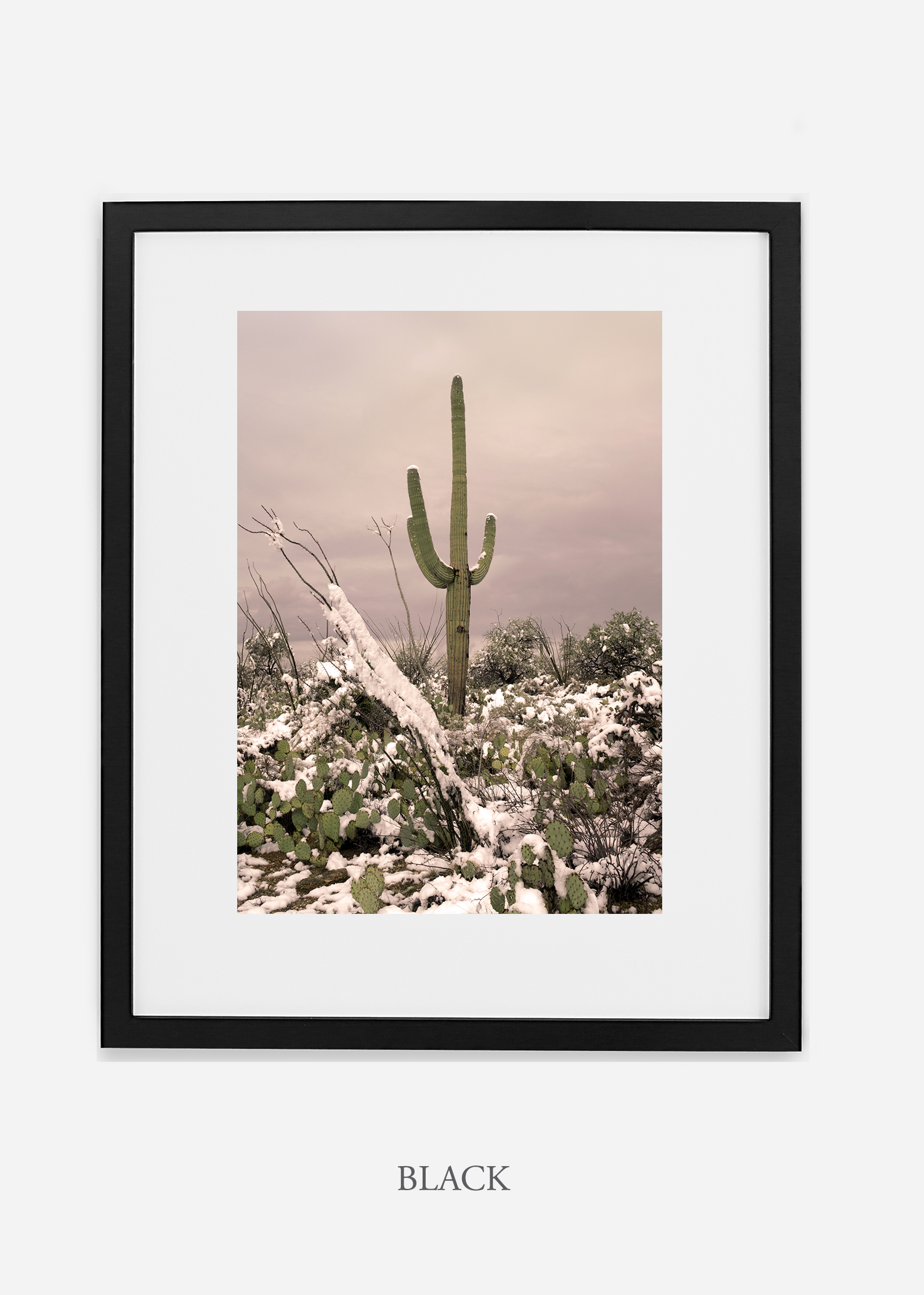 blackframe-saguaroNo.4-wildercalifornia-art-wallart-cactusprint-homedecor-prints-arizona-botanical-artwork-interiordesign.jpg