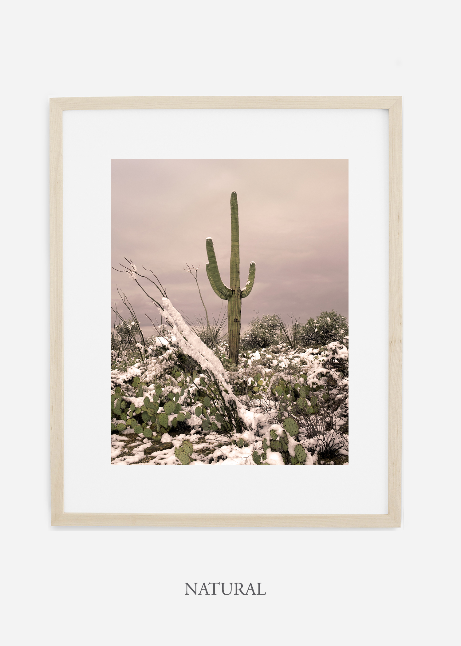 naturalframe-saguaroNo.4-wildercalifornia-art-wallart-cactusprint-homedecor-prints-arizona-botanical-artwork-interiordesign.jpg
