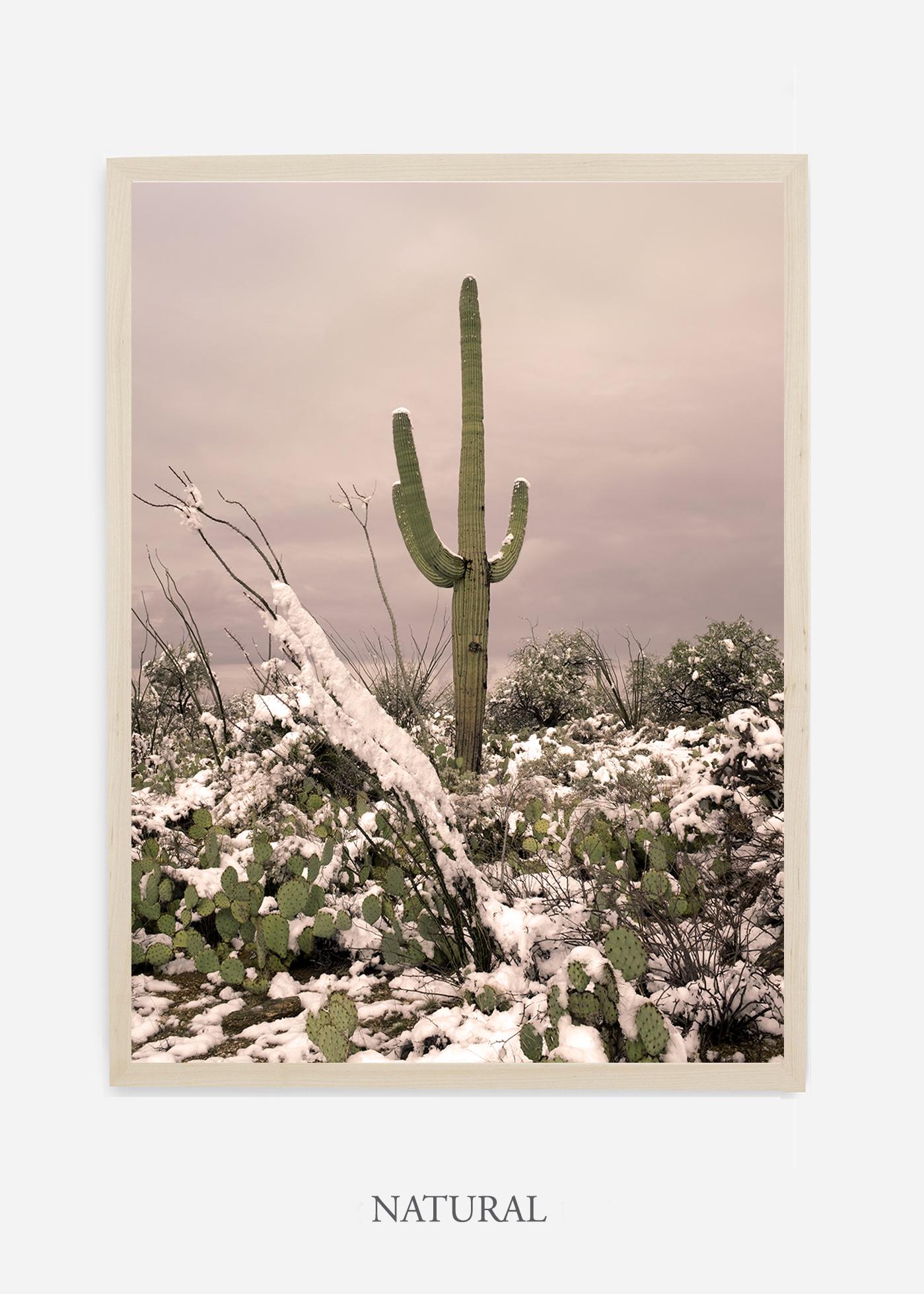 nomat-naturalframe-saguaroNo.4-wildercalifornia-art-wallart-cactusprint-homedecor-prints-arizona-botanical-artwork-interiordesign.jpg