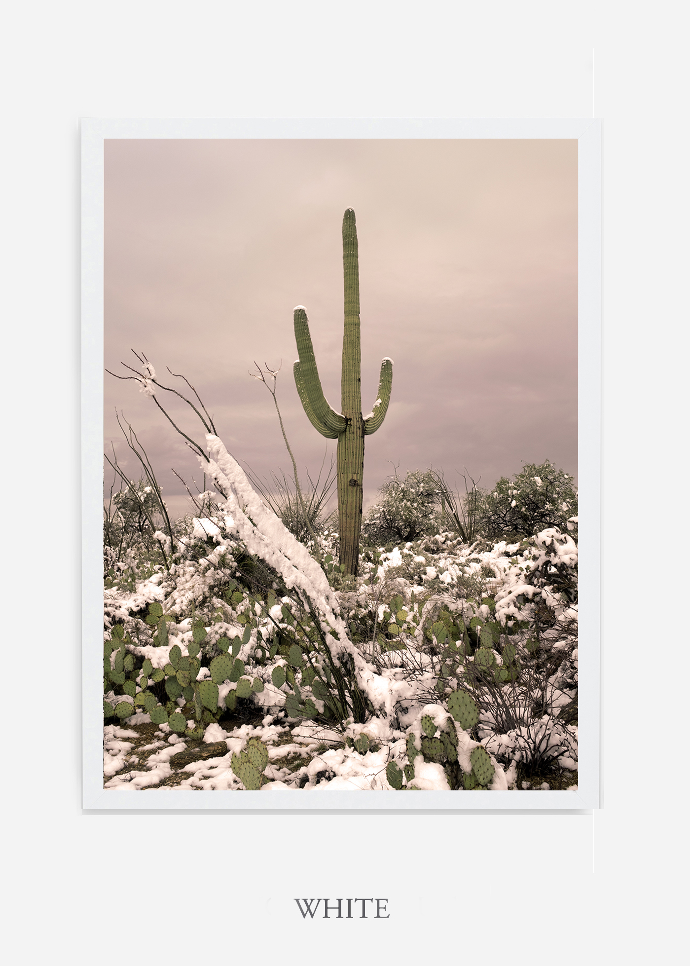 nomat-whiteframe-saguaroNo.4-wildercalifornia-art-wallart-cactusprint-homedecor-prints-arizona-botanical-artwork-interiordesign.jpg