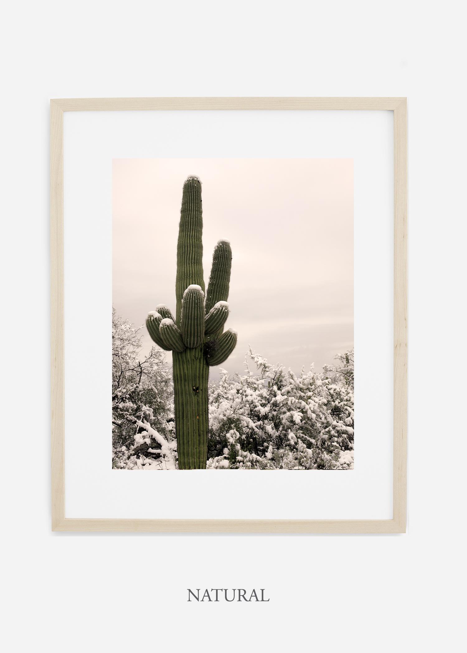 naturalframe-saguaroNo.6-wildercalifornia-art-wallart-cactusprint-homedecor-prints-arizona-botanical-artwork-interiordesign.jpg