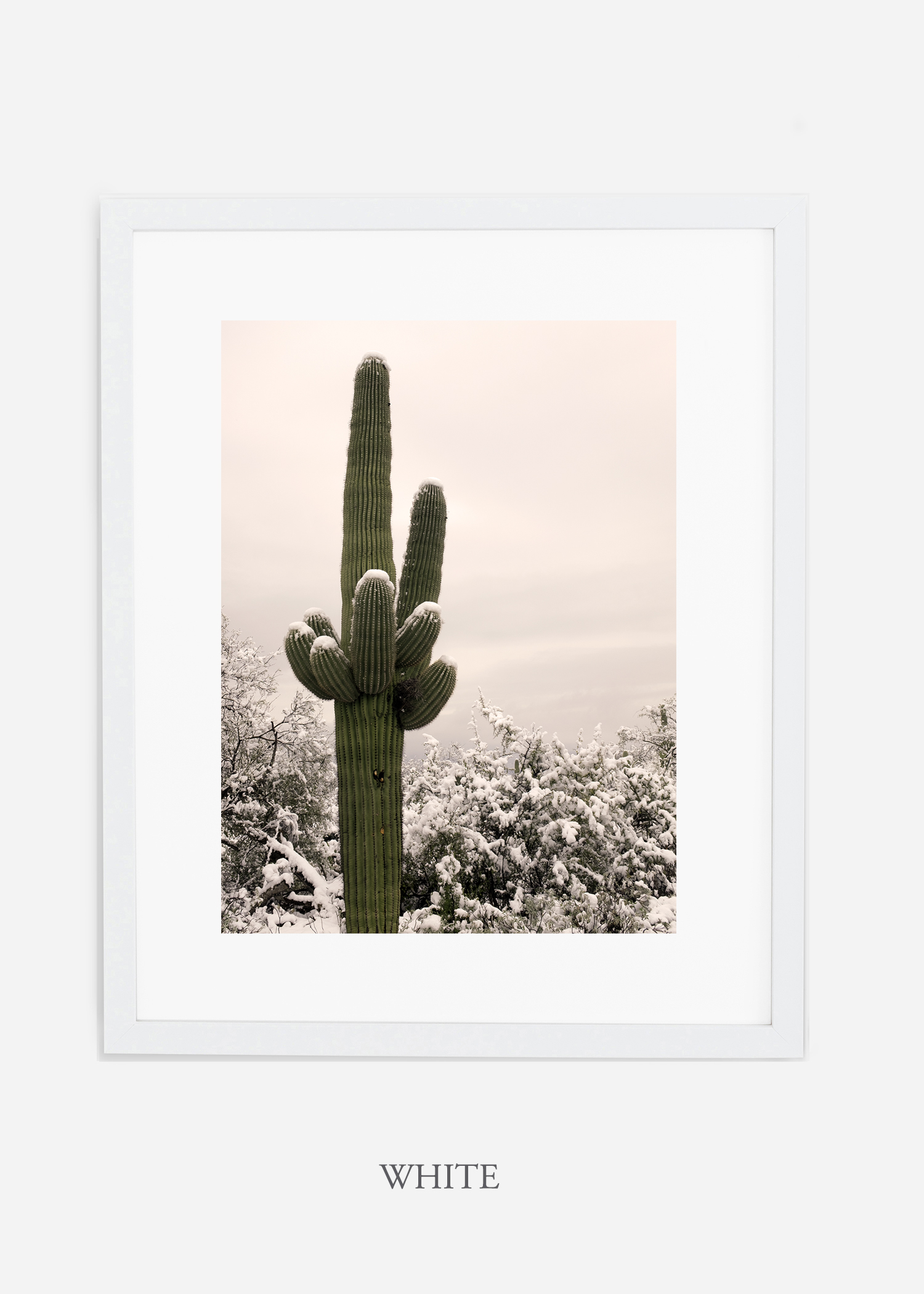 whiteframe-saguaroNo.6-wildercalifornia-art-wallart-cactusprint-homedecor-prints-arizona-botanical-artwork-interiordesign.jpg