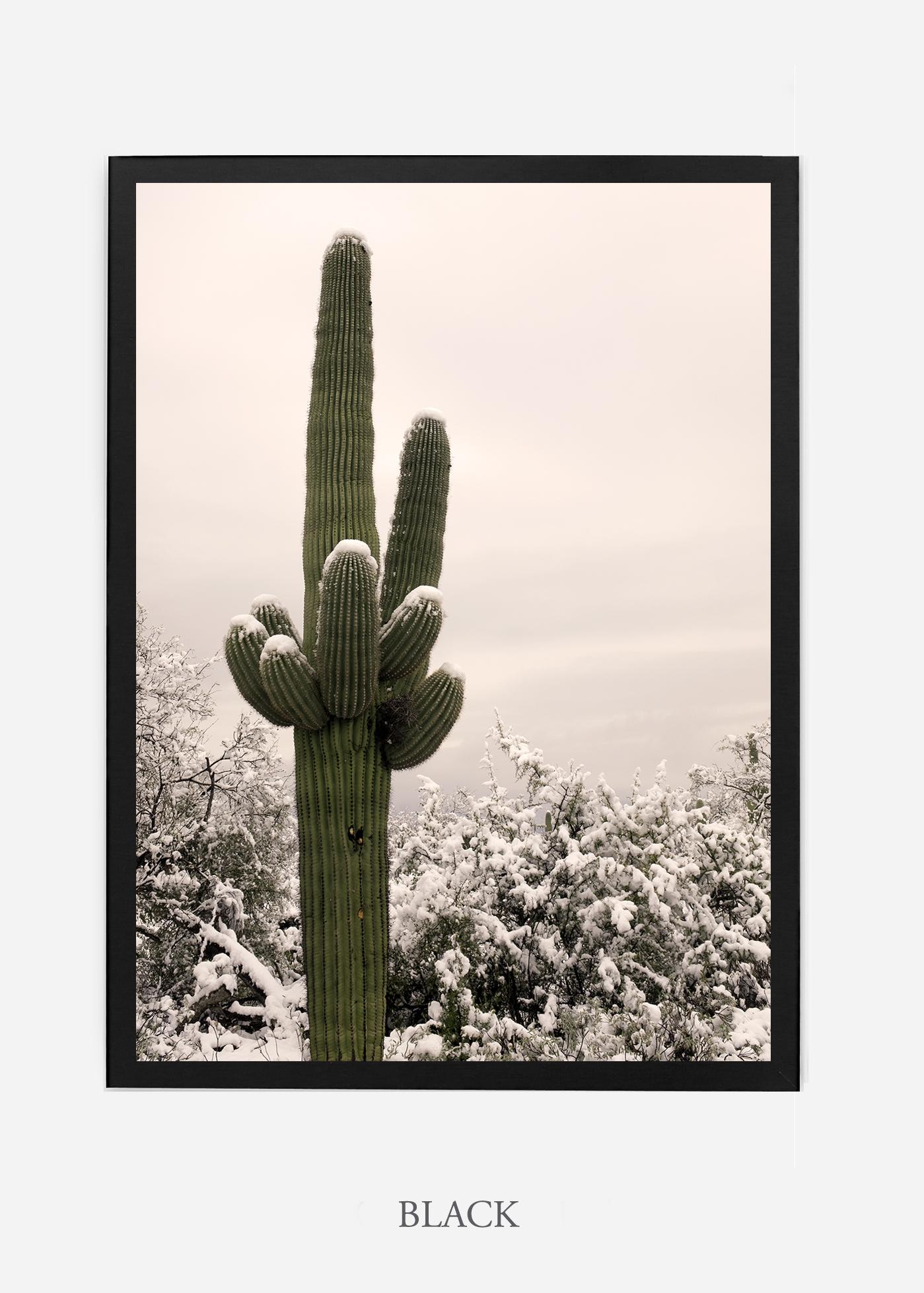 nomat-blackframe-saguaroNo.6-wildercalifornia-art-wallart-cactusprint-homedecor-prints-arizona-botanical-artwork-interiordesign.jpg