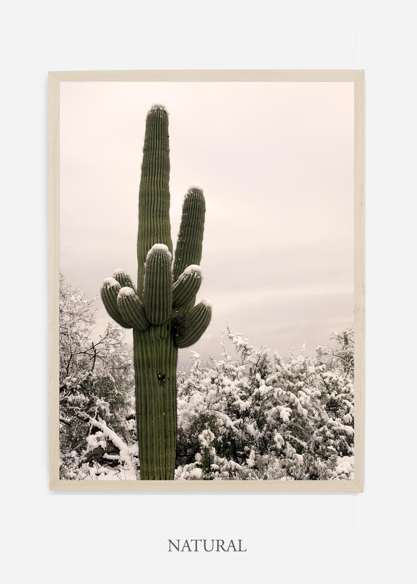 nomat-naturalframe-saguaroNo.6-wildercalifornia-art-wallart-cactusprint-homedecor-prints-arizona-botanical-artwork-interiordesign.jpg
