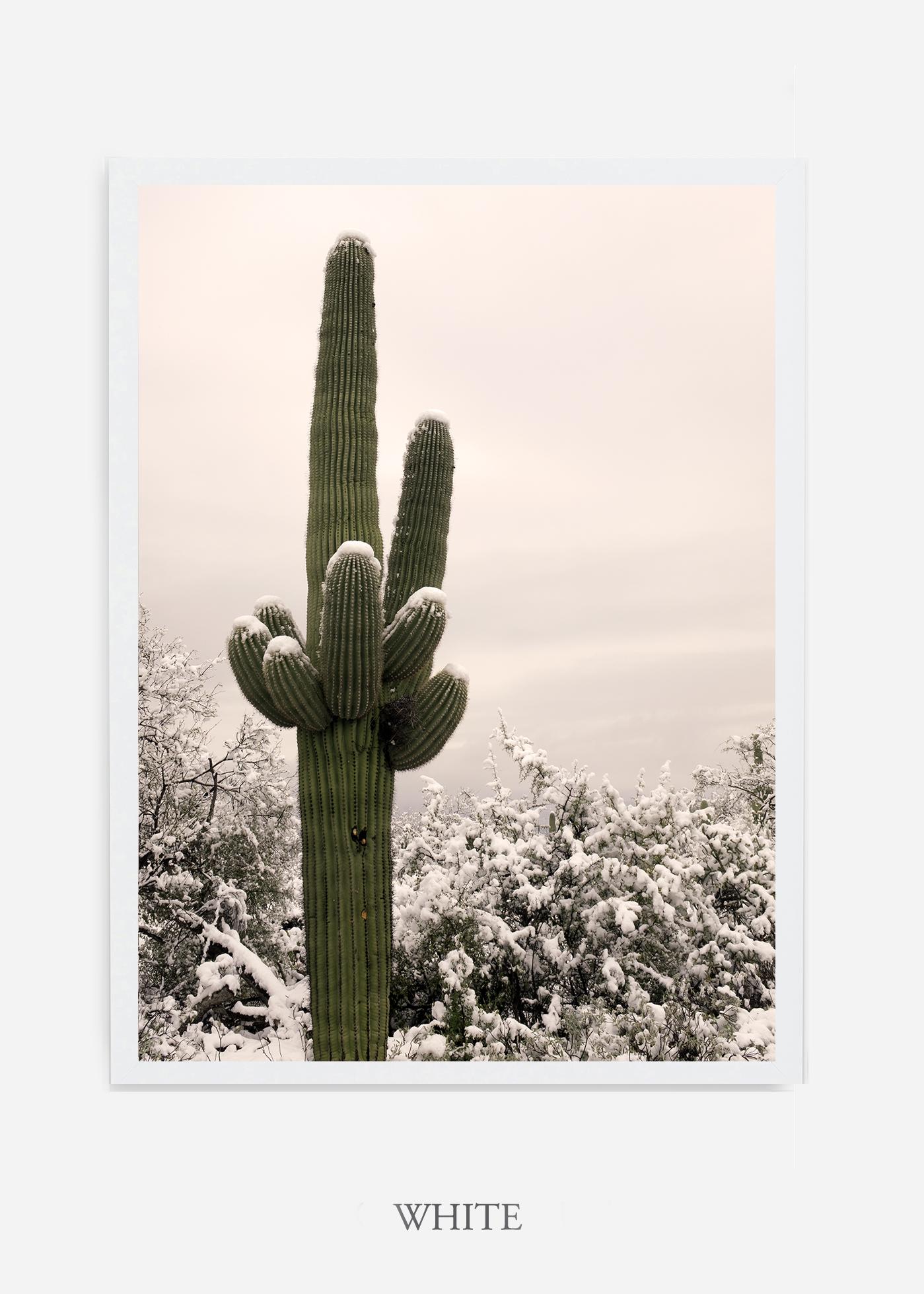 nomat-whiteframe-saguaroNo.6-wildercalifornia-art-wallart-cactusprint-homedecor-prints-arizona-botanical-artwork-interiordesign.jpg