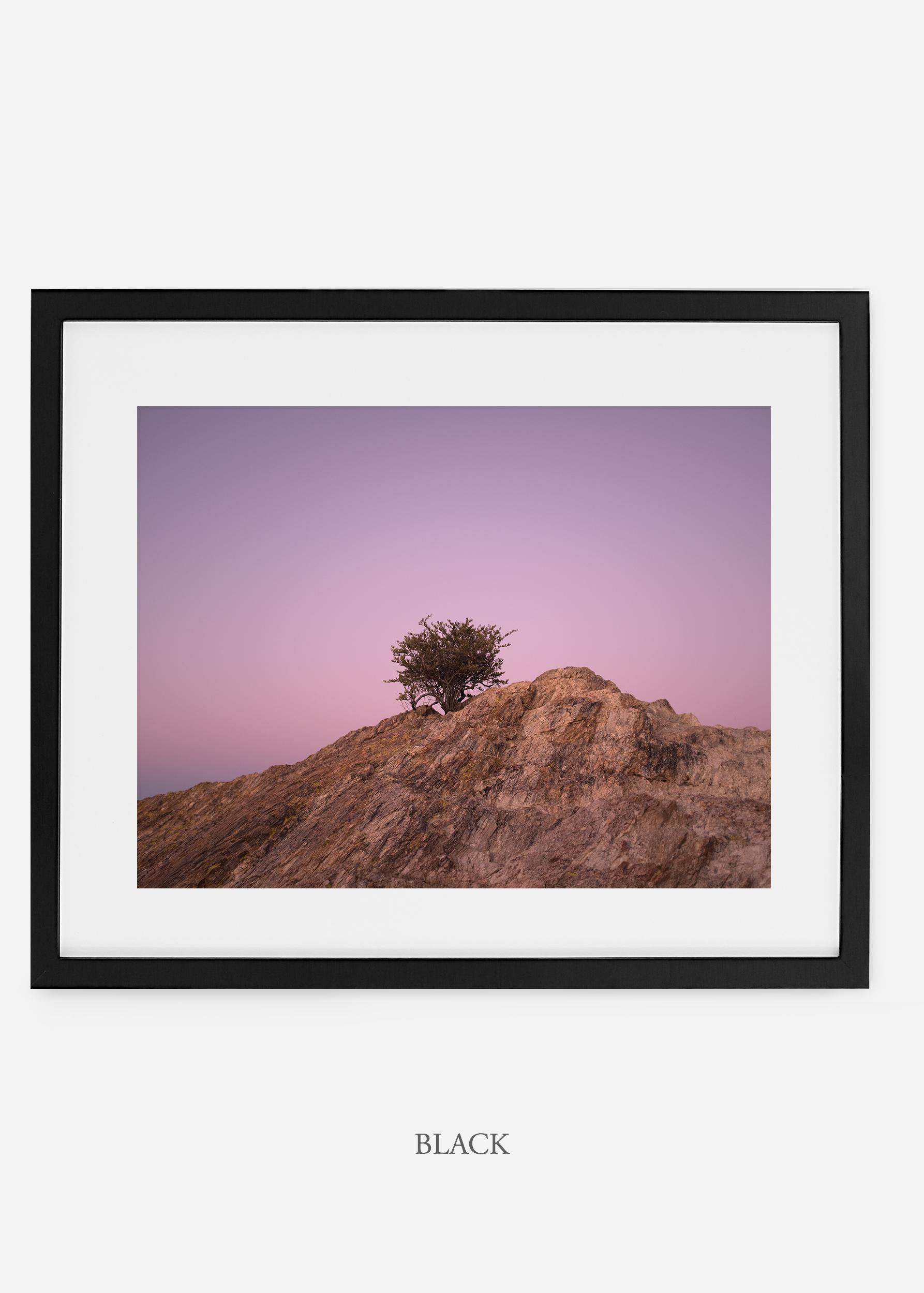 blackframe-saguaroNo.11-wildercalifornia-art-wallart-cactusprint-homedecor-prints-arizona-botanical-artwork-interiordesign.jpg