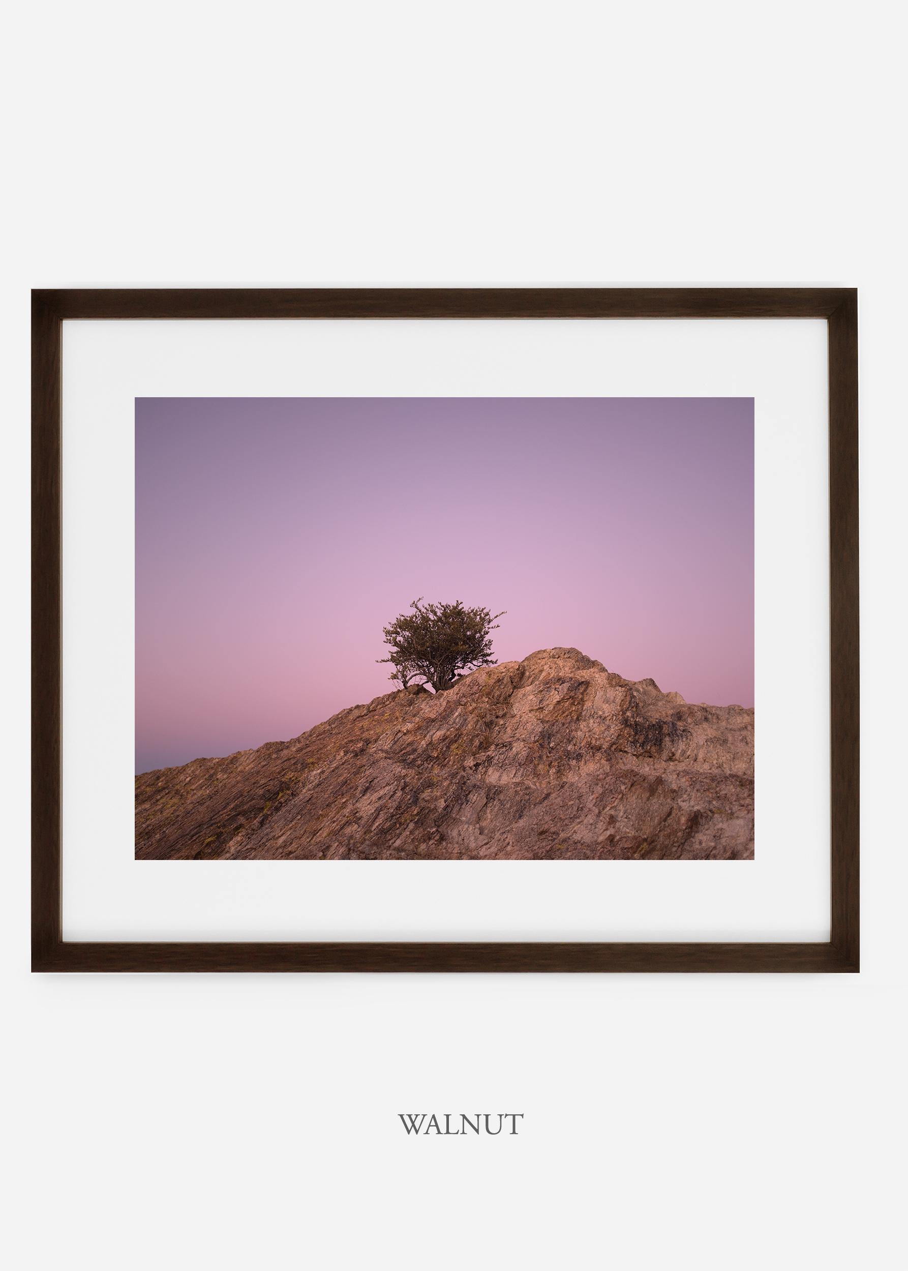 walnutframe-saguaroNo.11-wildercalifornia-art-wallart-cactusprint-homedecor-prints-arizona-botanical-artwork-interiordesign.jpg