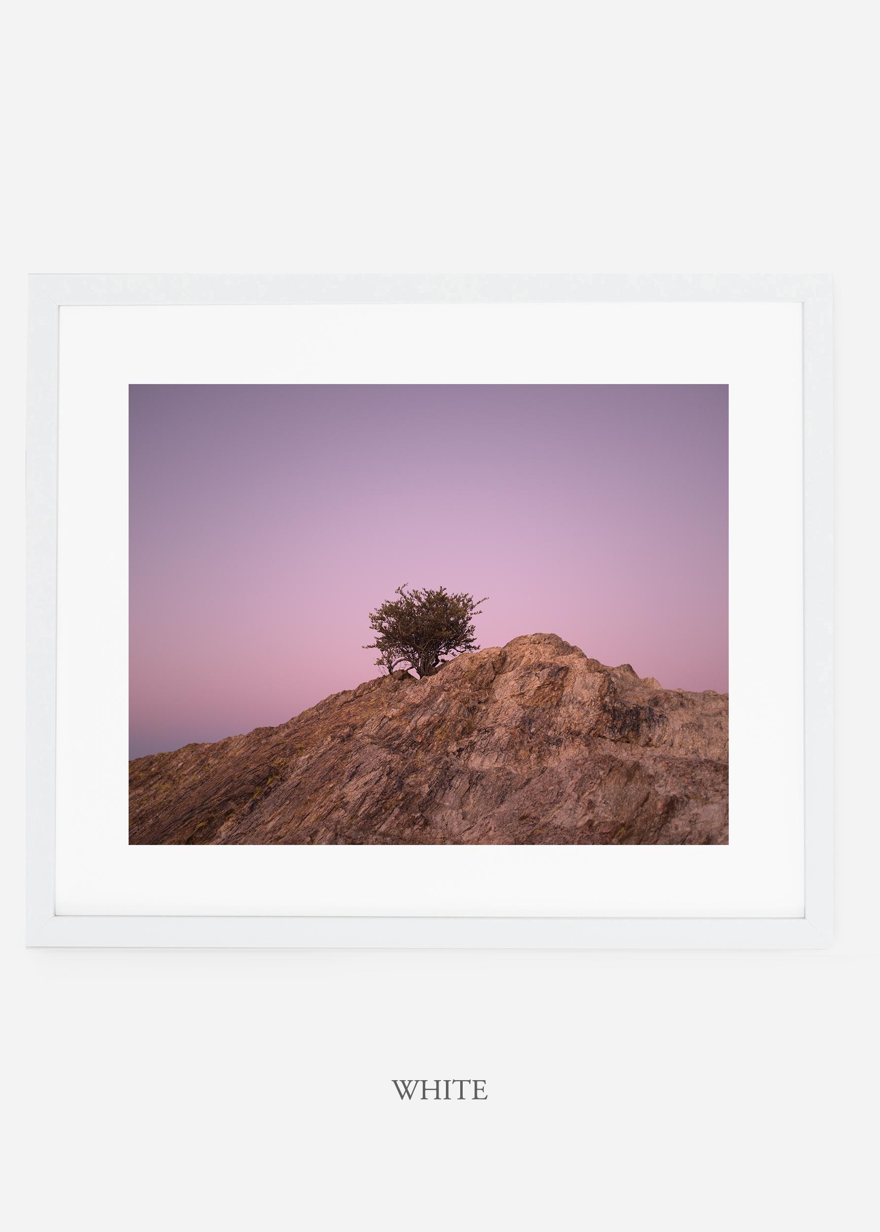 whiteframe-saguaroNo.11-wildercalifornia-art-wallart-cactusprint-homedecor-prints-arizona-botanical-artwork-interiordesign.jpg
