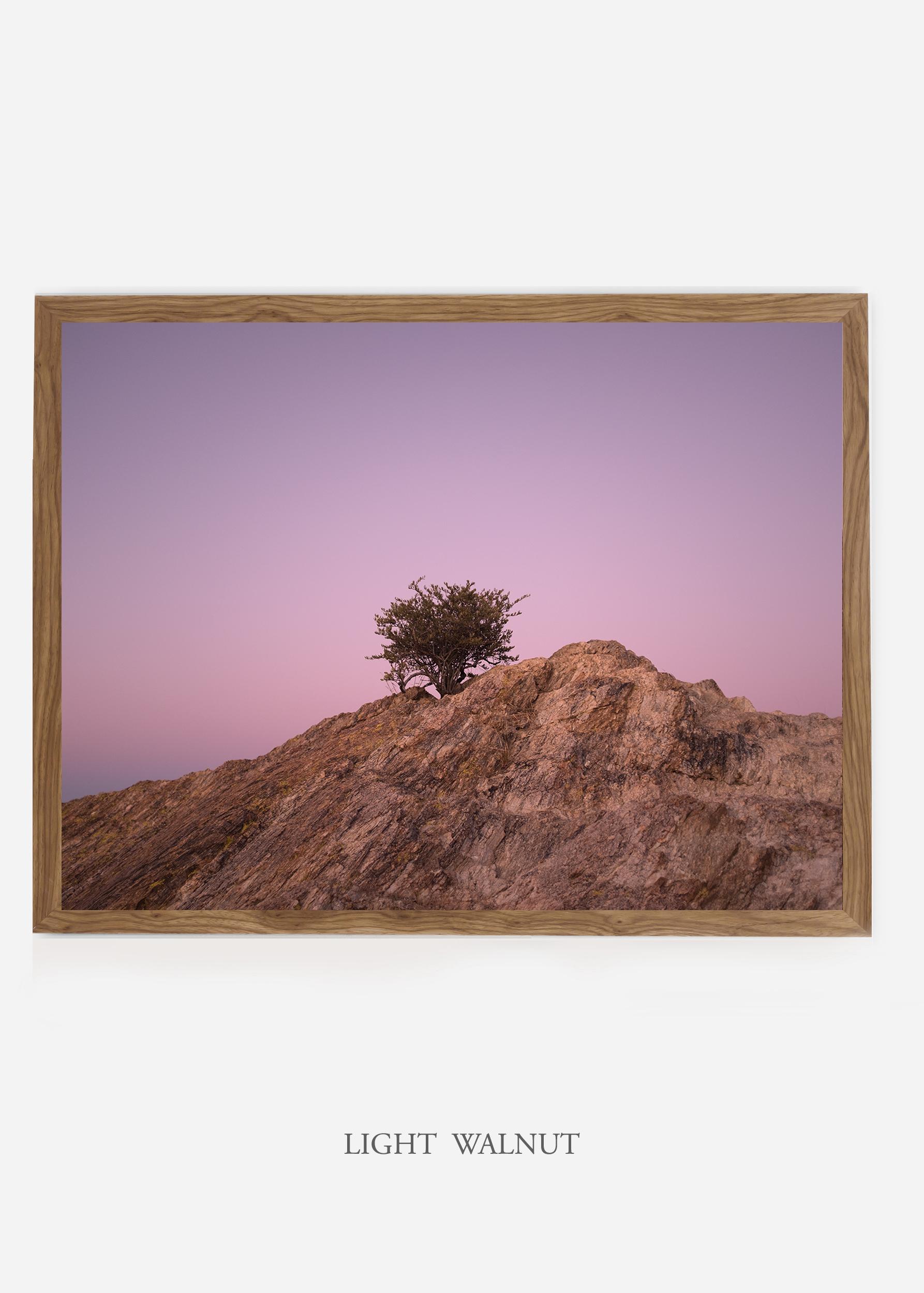 nomat_lightwalnutframe-saguaroNo.11-wildercalifornia-art-wallart-cactusprint-homedecor-prints-arizona-botanical-artwork-interiordesign.jpg