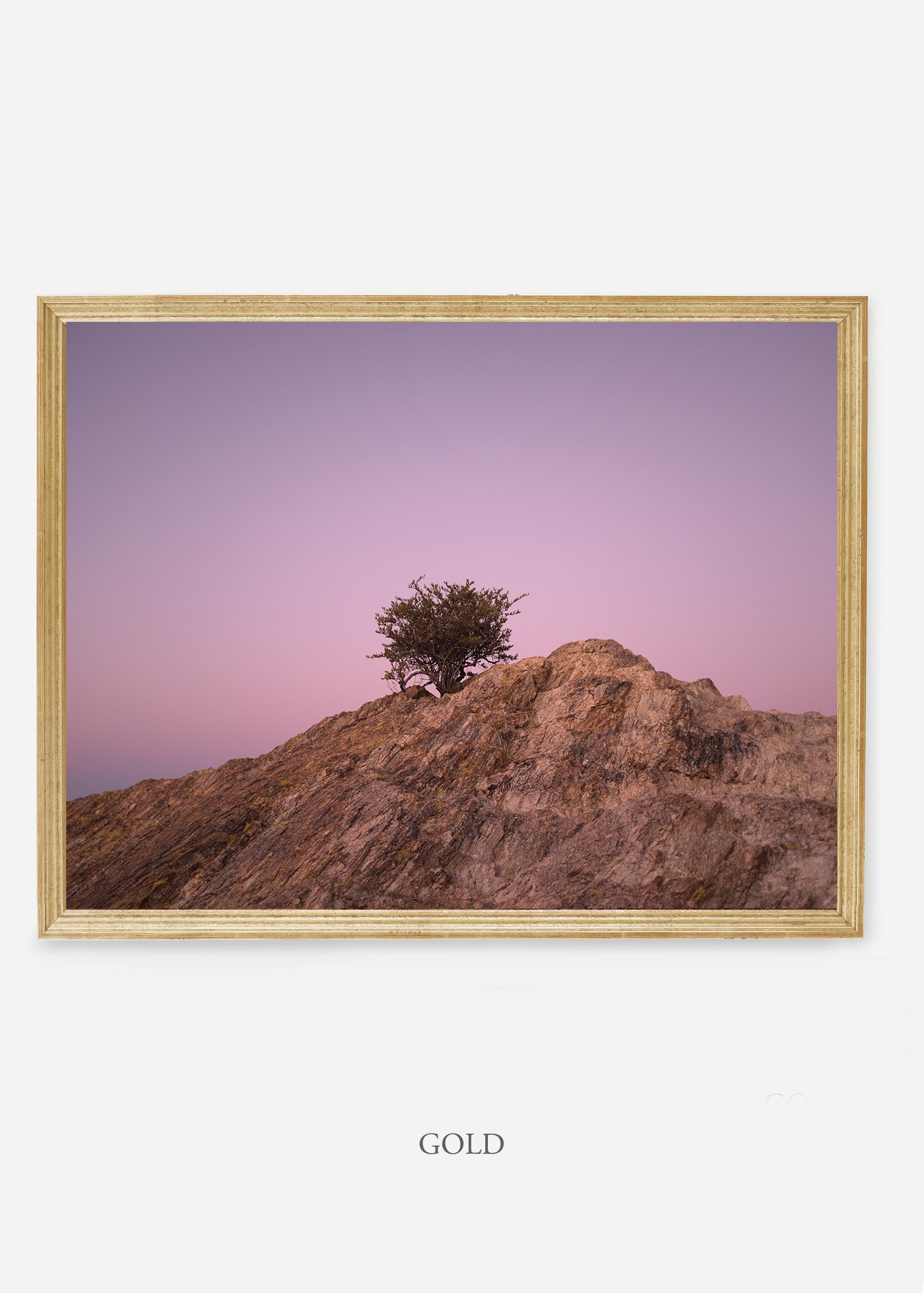 nomat-goldframe-saguaroNo.11-wildercalifornia-art-wallart-cactusprint-homedecor-prints-arizona-botanical-artwork-interiordesign.jpg