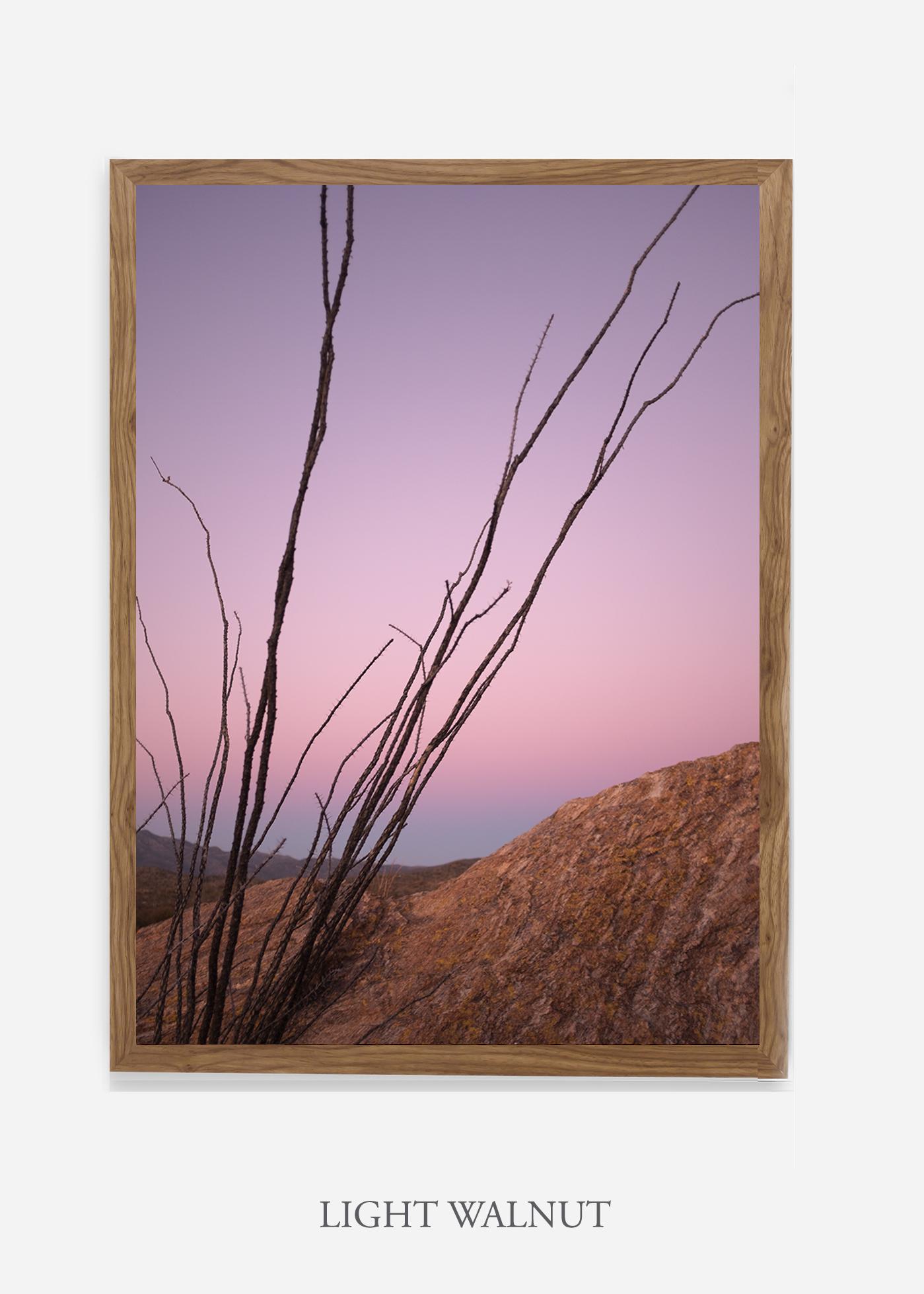 nomat-lightwalnutframe-saguaroNo.12-wildercalifornia-art-wallart-cactusprint-homedecor-prints-arizona-botanical-artwork-interiordesign.jpg
