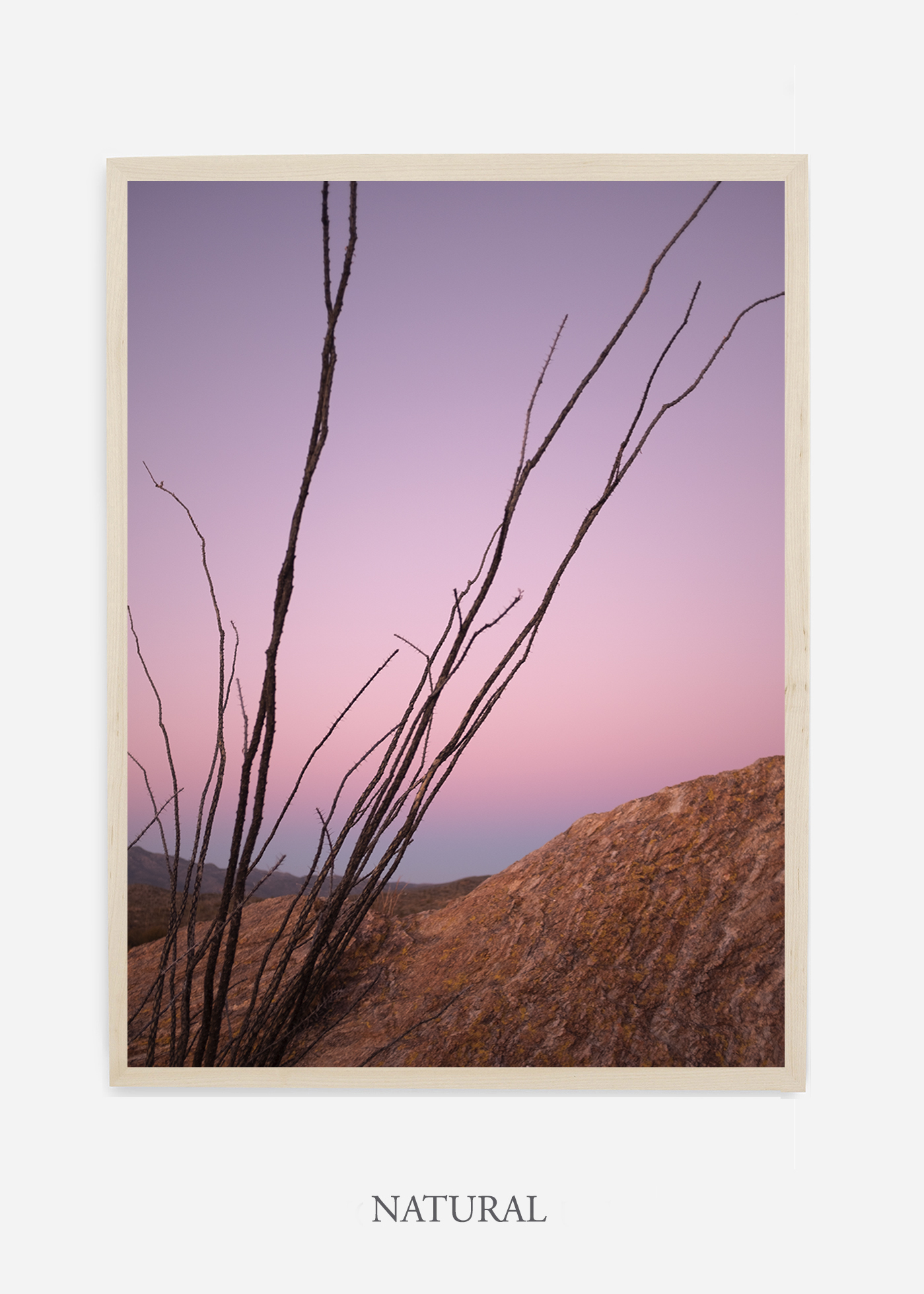 nomat-naturalframe-saguaroNo.12-wildercalifornia-art-wallart-cactusprint-homedecor-prints-arizona-botanical-artwork-interiordesign.jpg