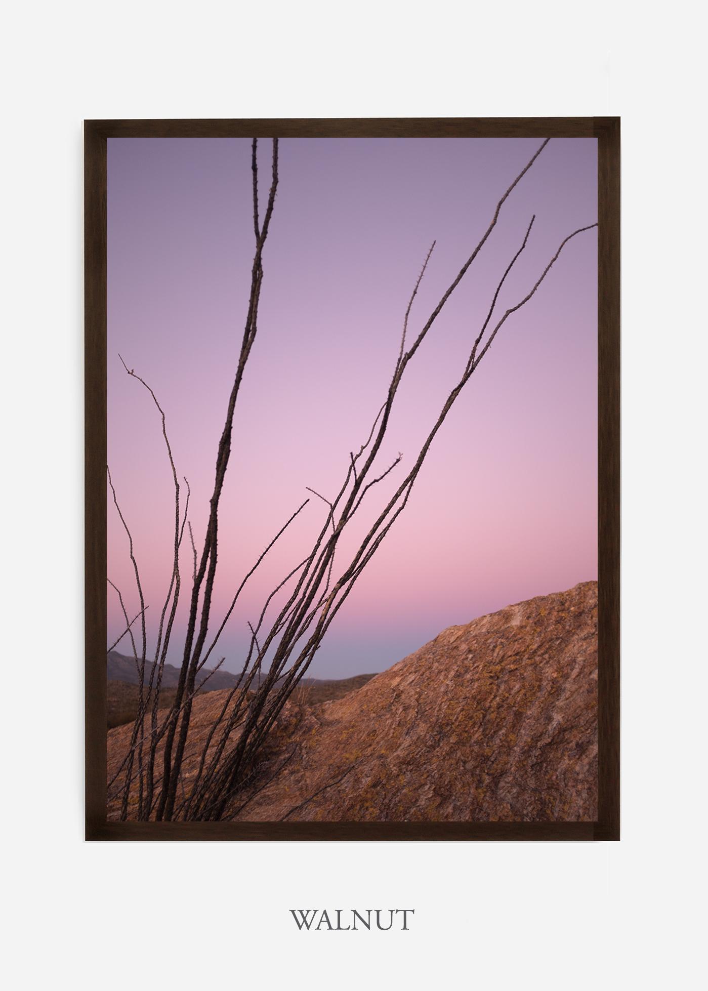 nomat-walnutframe-saguaroNo.12-wildercalifornia-art-wallart-cactusprint-homedecor-prints-arizona-botanical-artwork-interiordesign.jpg