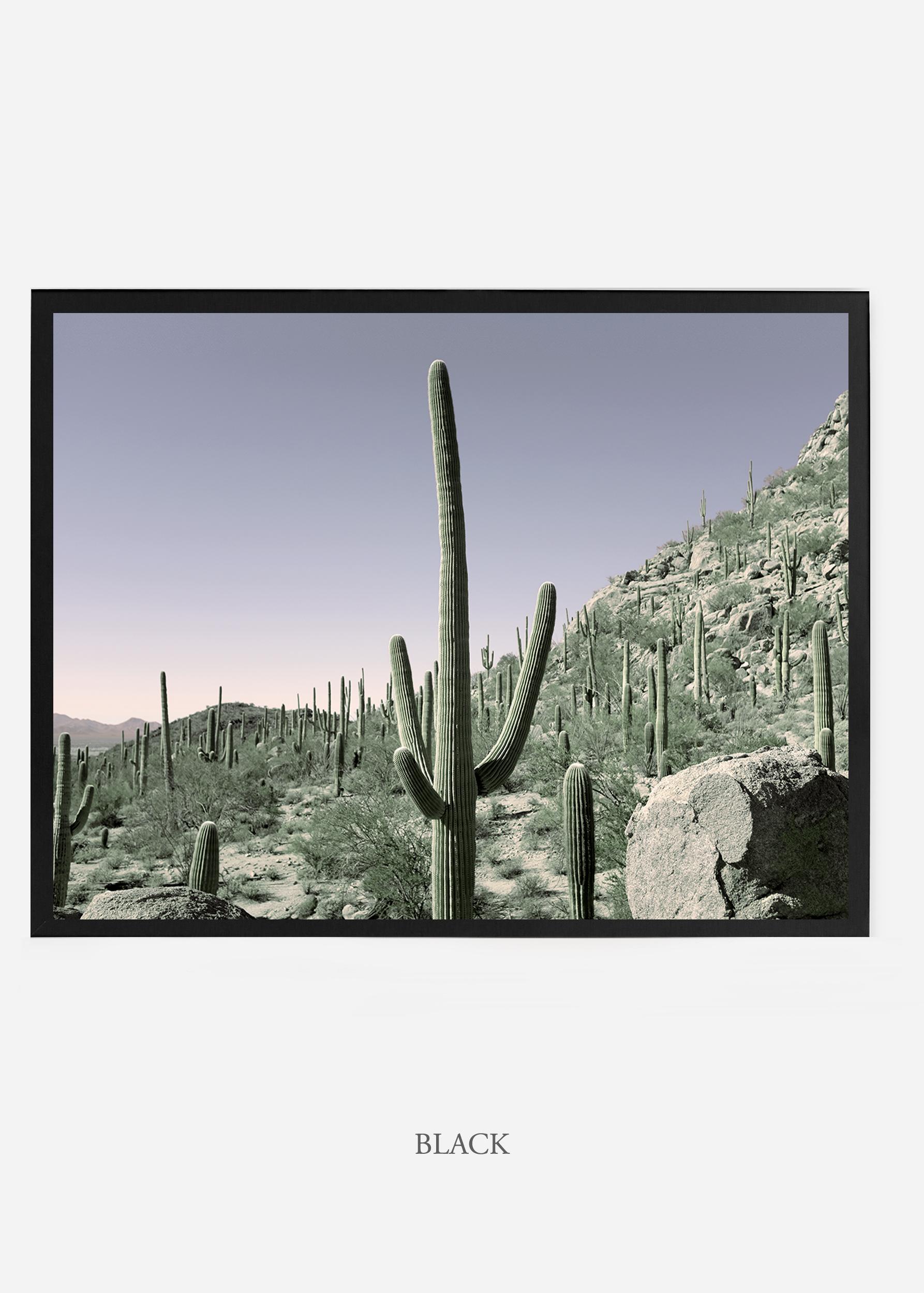 nomat_blackframe-saguaroNo.13-wildercalifornia-art-wallart-cactusprint-homedecor-prints-arizona-botanical-artwork-interiordesign.jpg
