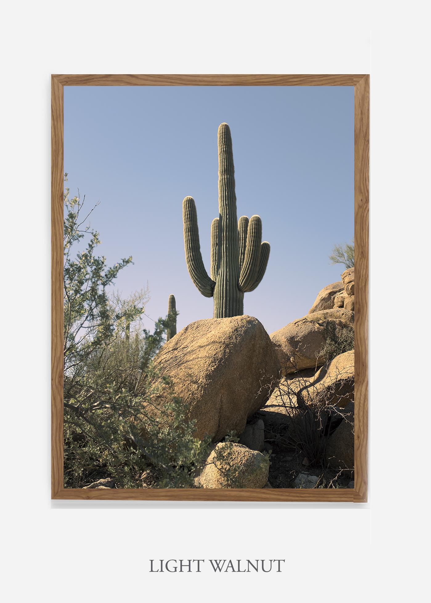 nomat-lightwalnutframe-saguaroNo.14-wildercalifornia-art-wallart-cactusprint-homedecor-prints-arizona-botanical-artwork-interiordesign.jpg
