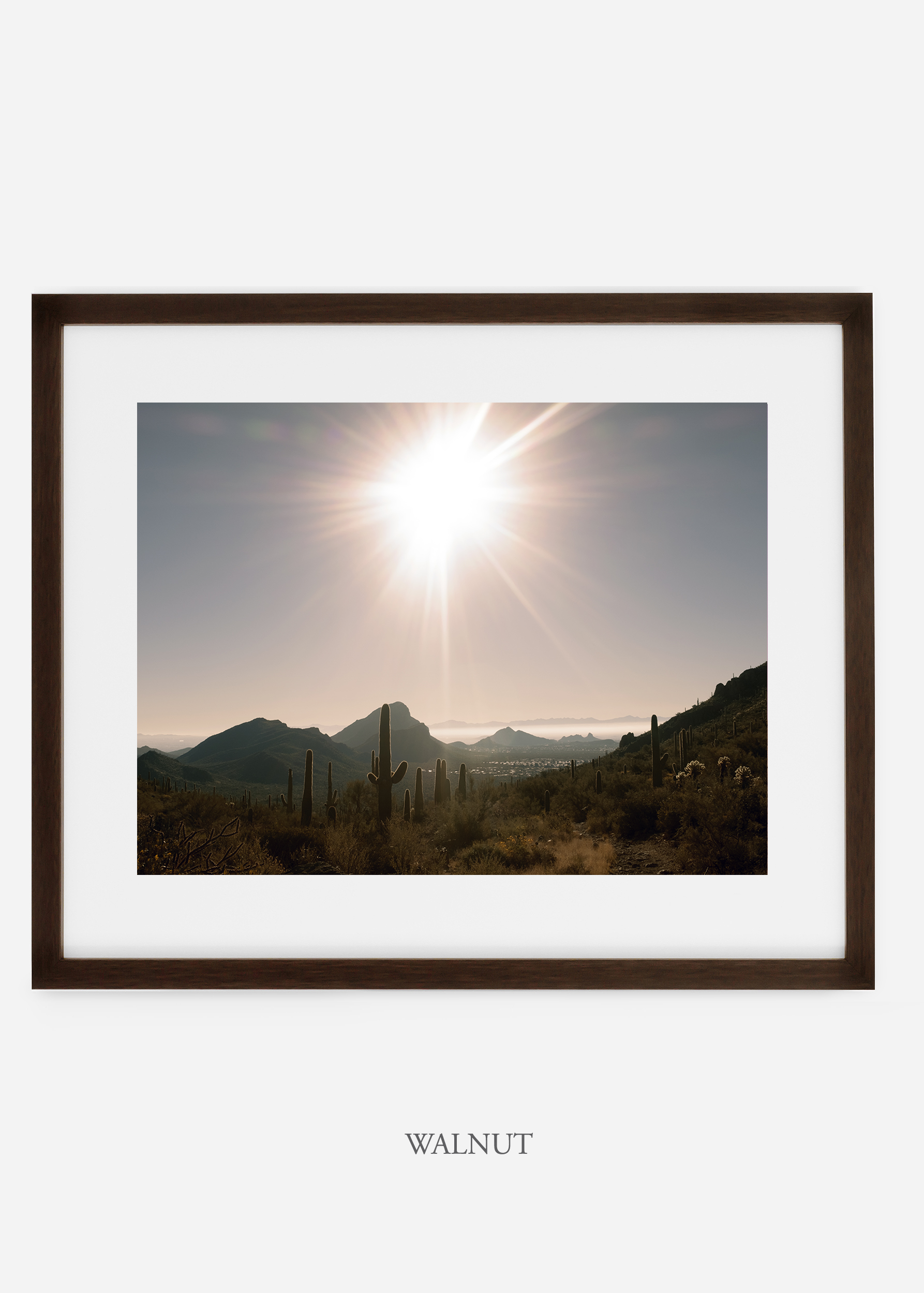 walnutframe-saguaroNo.15-wildercalifornia-art-wallart-cactusprint-homedecor-prints-arizona-botanical-artwork-interiordesign.jpg