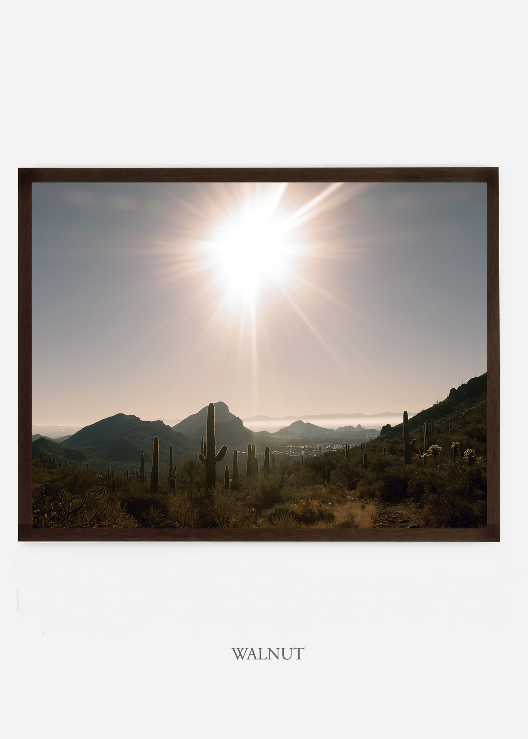 nomat_walnutframe-saguaroNo.15-wildercalifornia-art-wallart-cactusprint-homedecor-prints-arizona-botanical-artwork-interiordesign.jpg