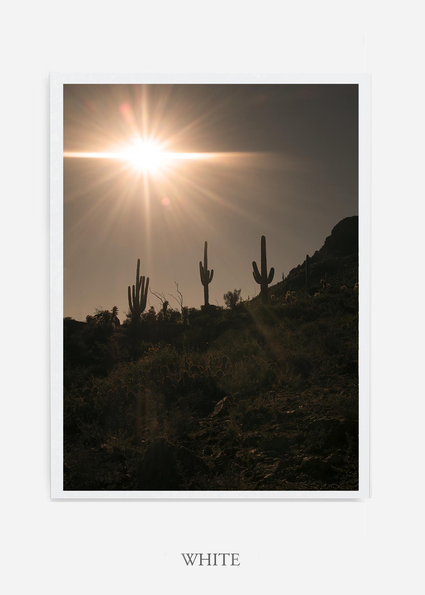 nomat-whiteframe-saguaroNo.16-wildercalifornia-art-wallart-cactusprint-homedecor-prints-arizona-botanical-artwork-interiordesign.jpg