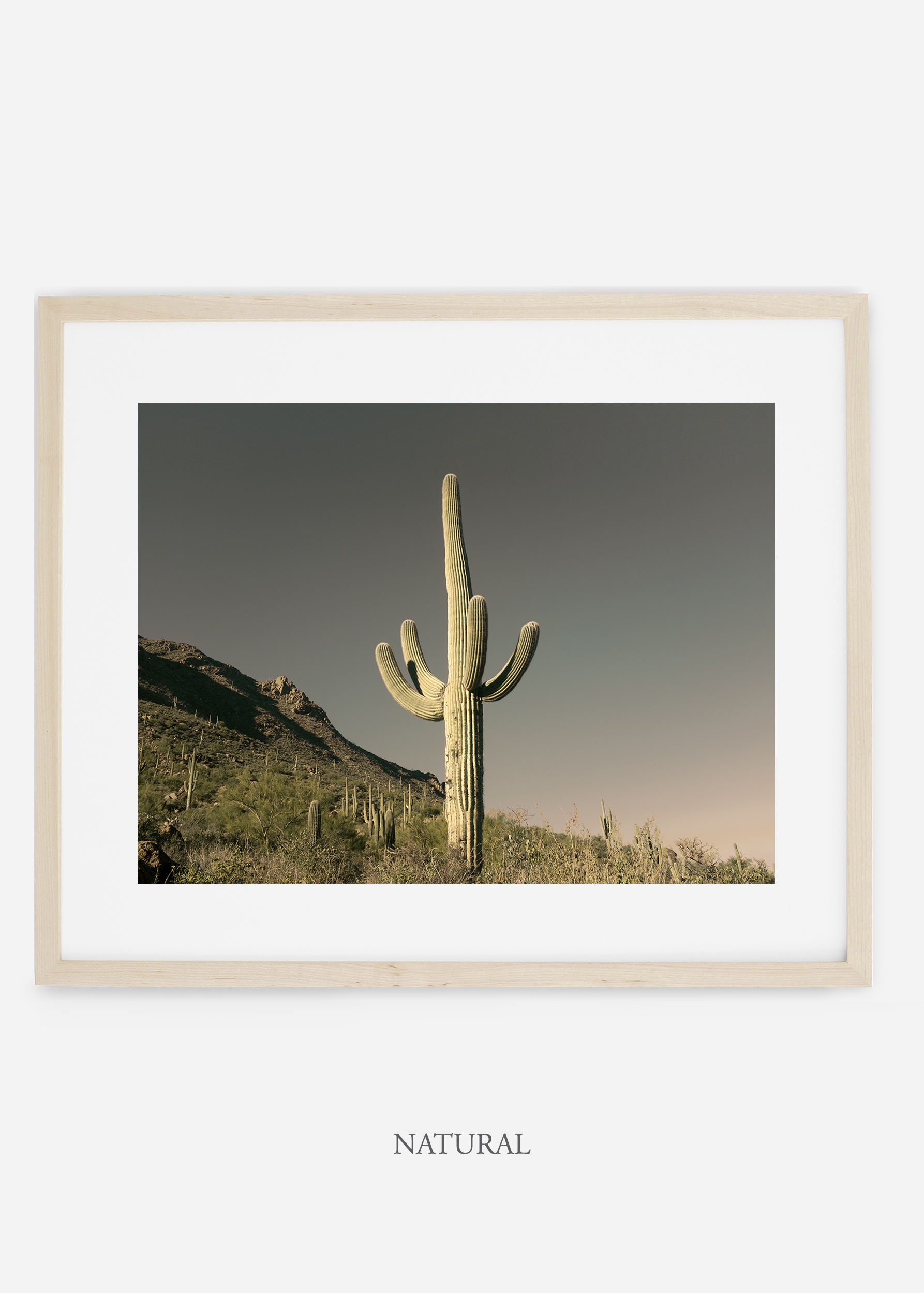 naturalframe-saguaroNo.19-wildercalifornia-art-wallart-cactusprint-homedecor-prints-arizona-botanical-artwork-interiordesign.jpg