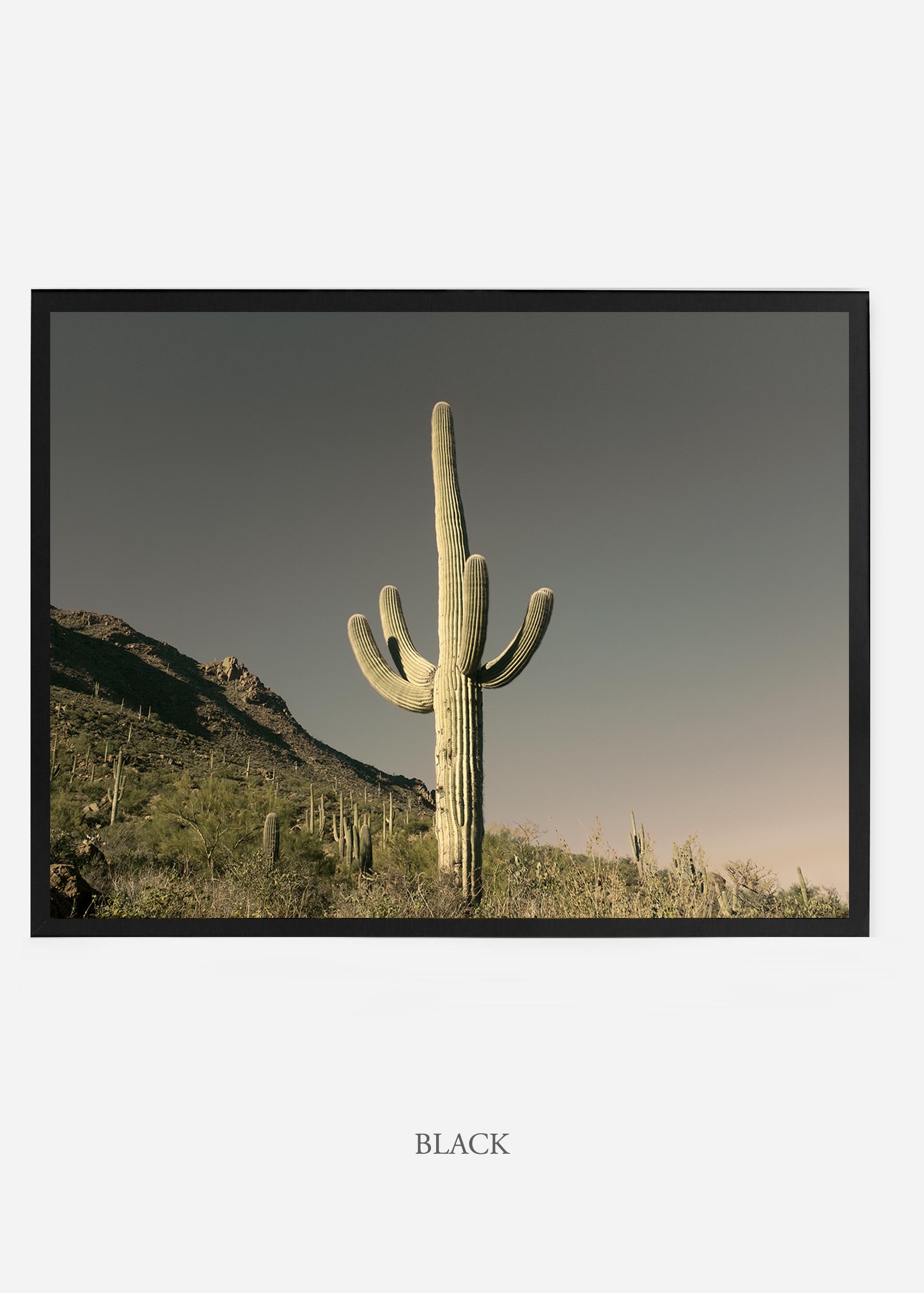 nomat_blackframe-saguaroNo.19-wildercalifornia-art-wallart-cactusprint-homedecor-prints-arizona-botanical-artwork-interiordesign.jpg