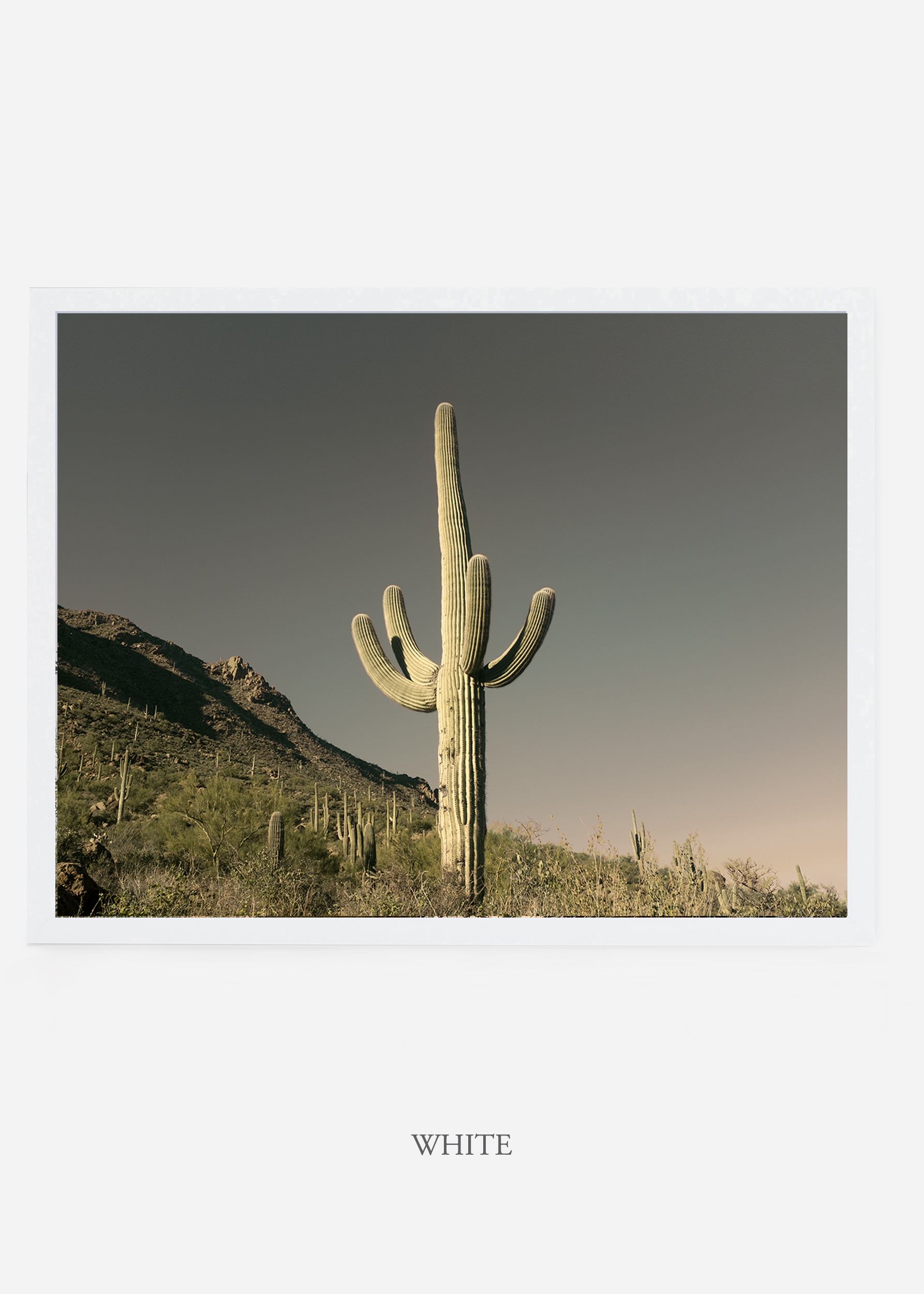 nomat_whiteframe-saguaroNo.19-wildercalifornia-art-wallart-cactusprint-homedecor-prints-arizona-botanical-artwork-interiordesign.jpg