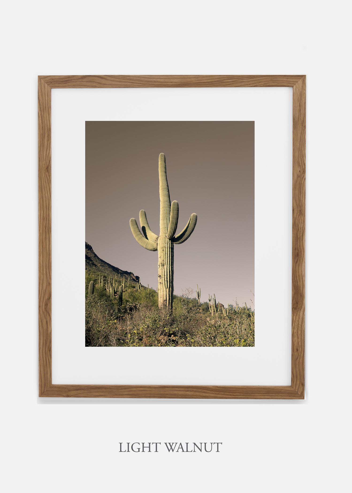 lightwalnutframe-saguaroNo.20-wildercalifornia-art-wallart-cactusprint-homedecor-prints-arizona-botanical-artwork-interiordesign.jpg